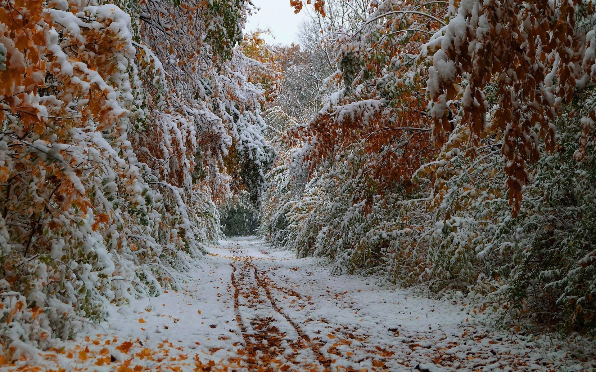 рано осень картинки со снегом журналисты