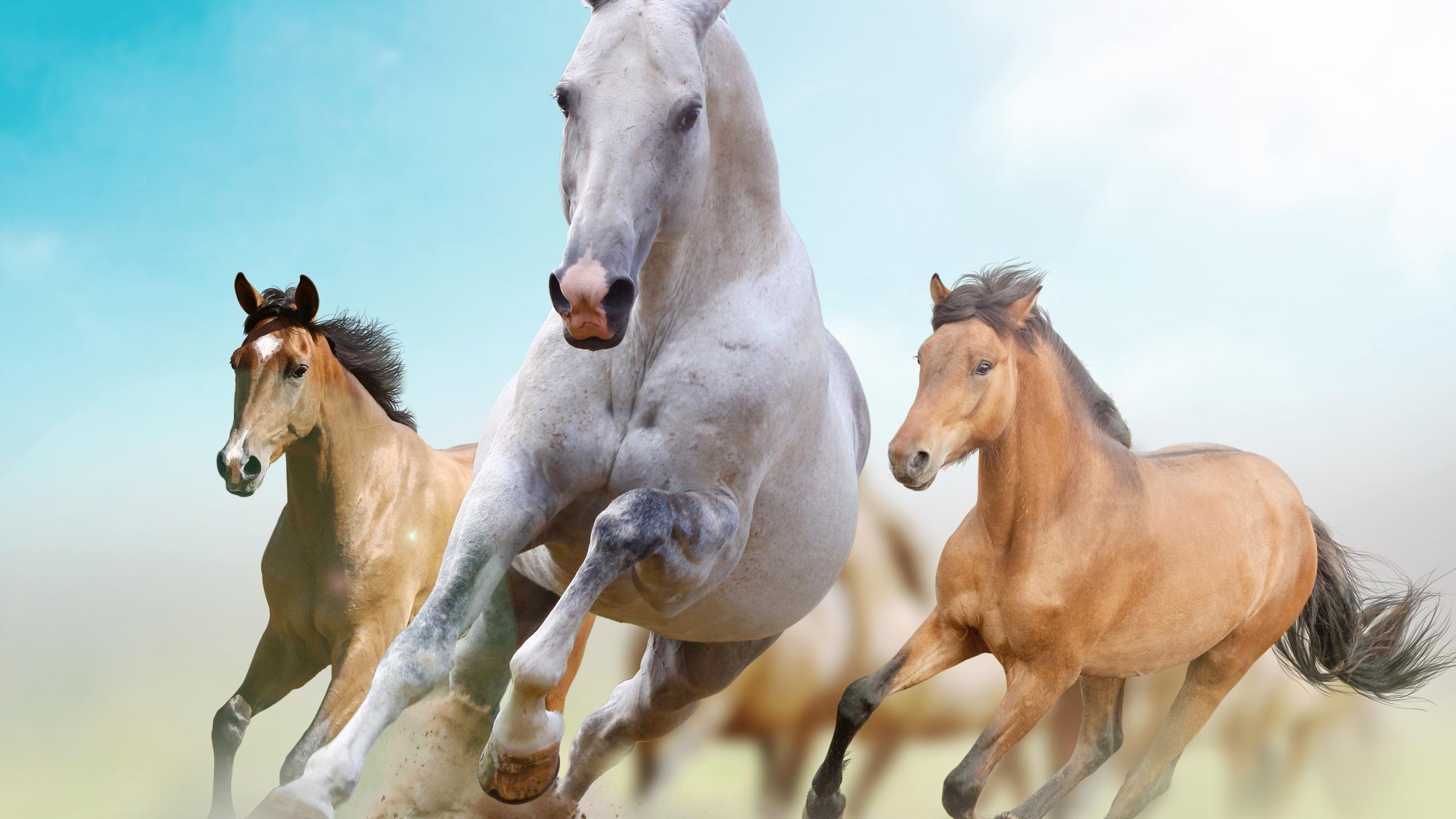 достаточно ровный, картинки с тремя лошадьми фоторезисторы применяются лишь