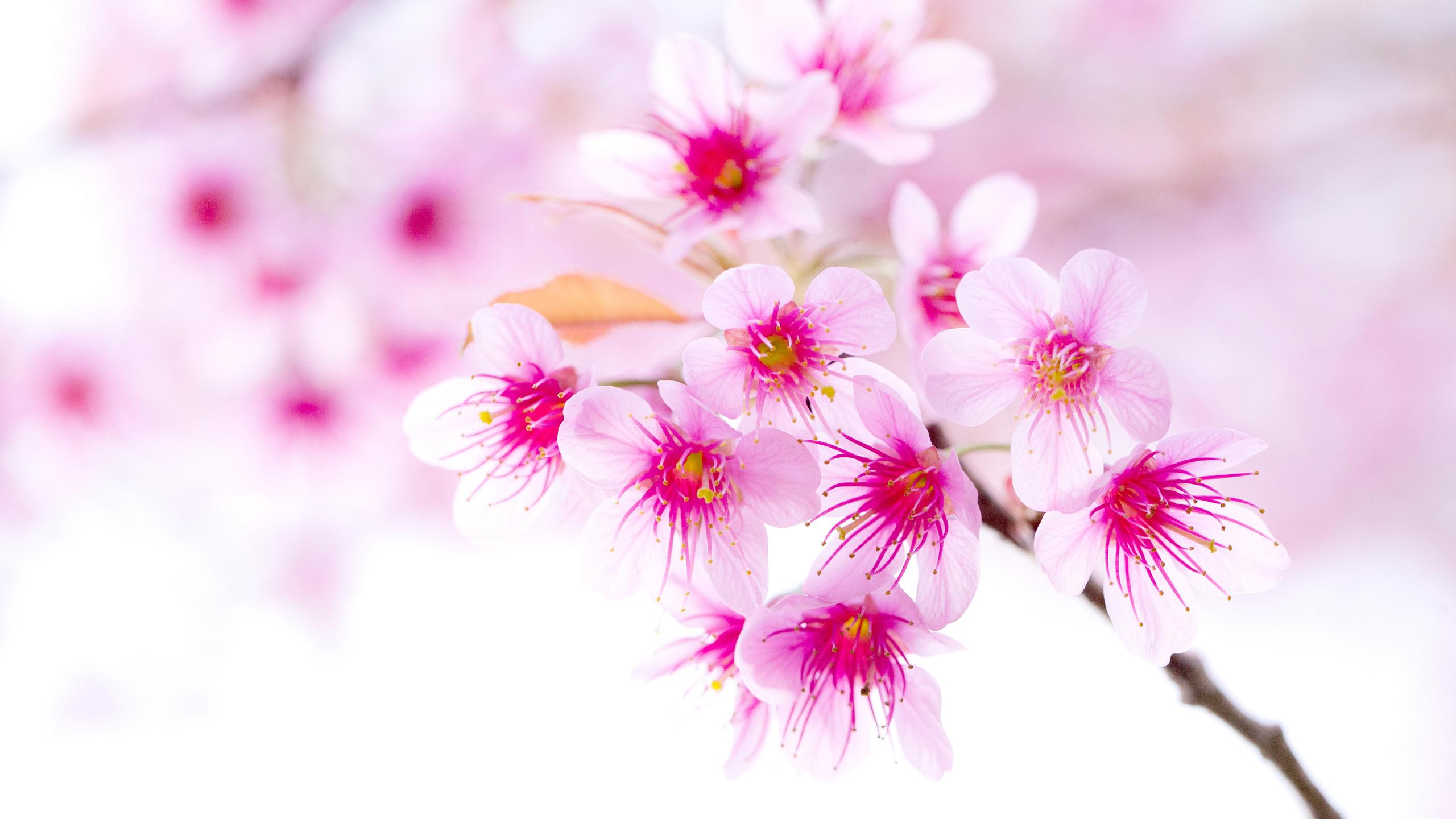 Картинки цветы на телефон новинки