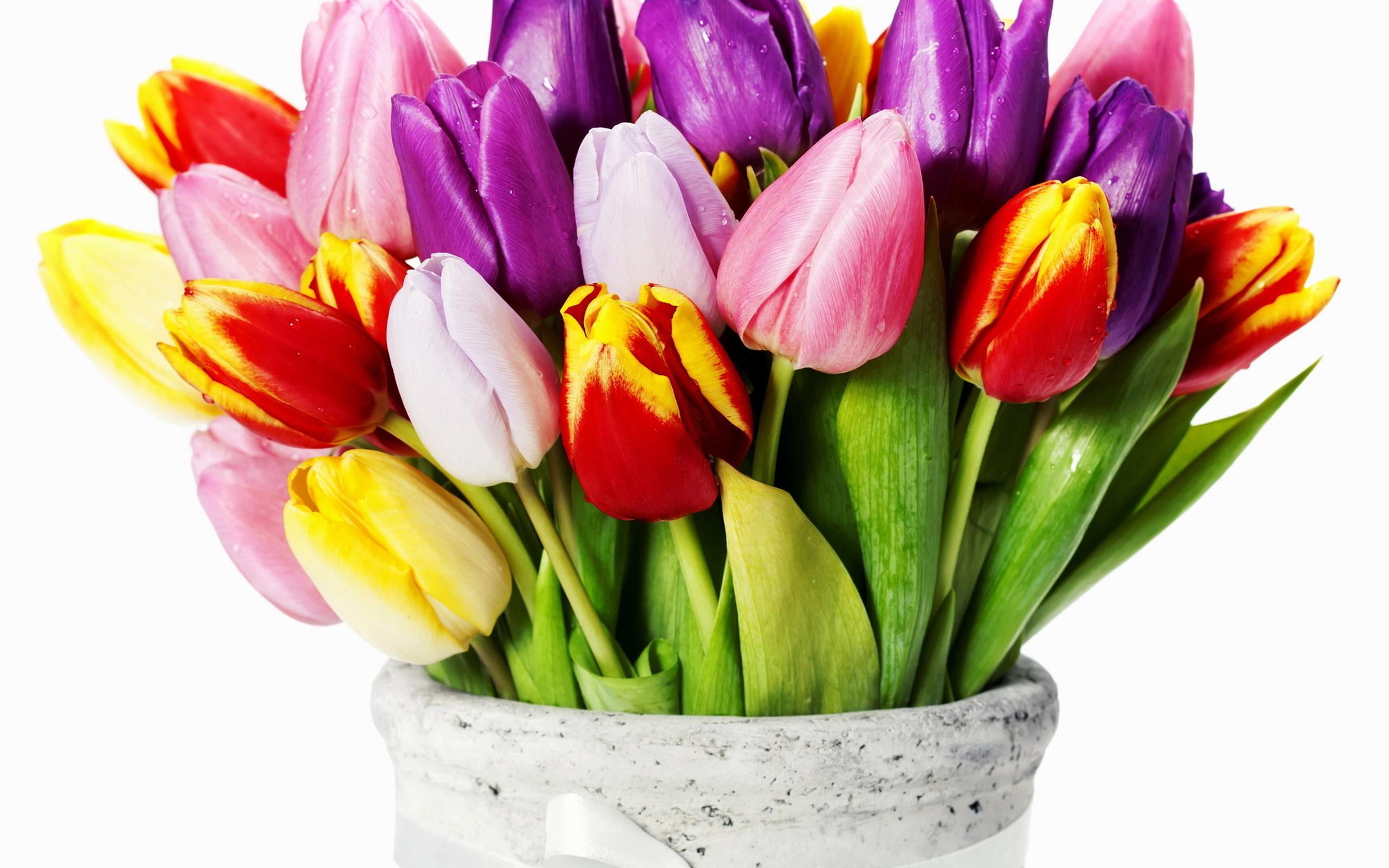 картинки с днем рождения цветы тюльпаны тому же