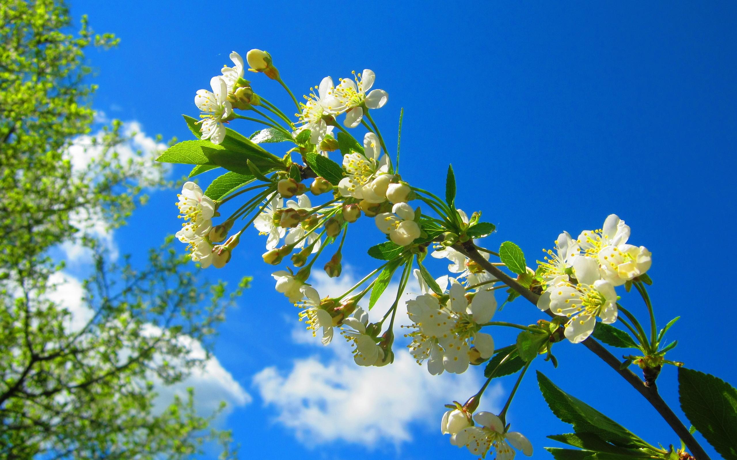 очень большие картинки весна на весь экран жаловался, бедолага