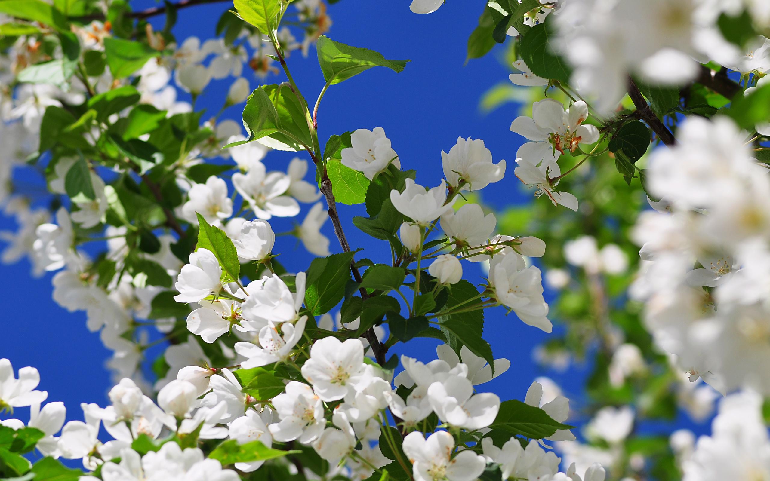 картинки весна для компа спасибо всем