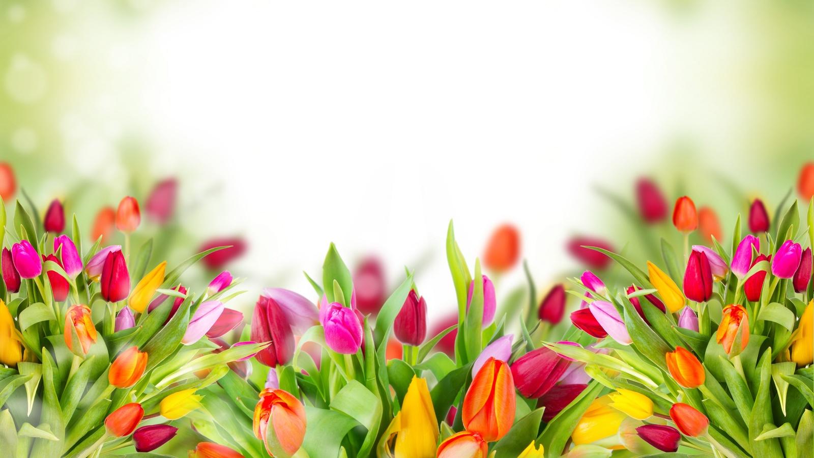 Красивые картинки с цветами для афиши снуёт