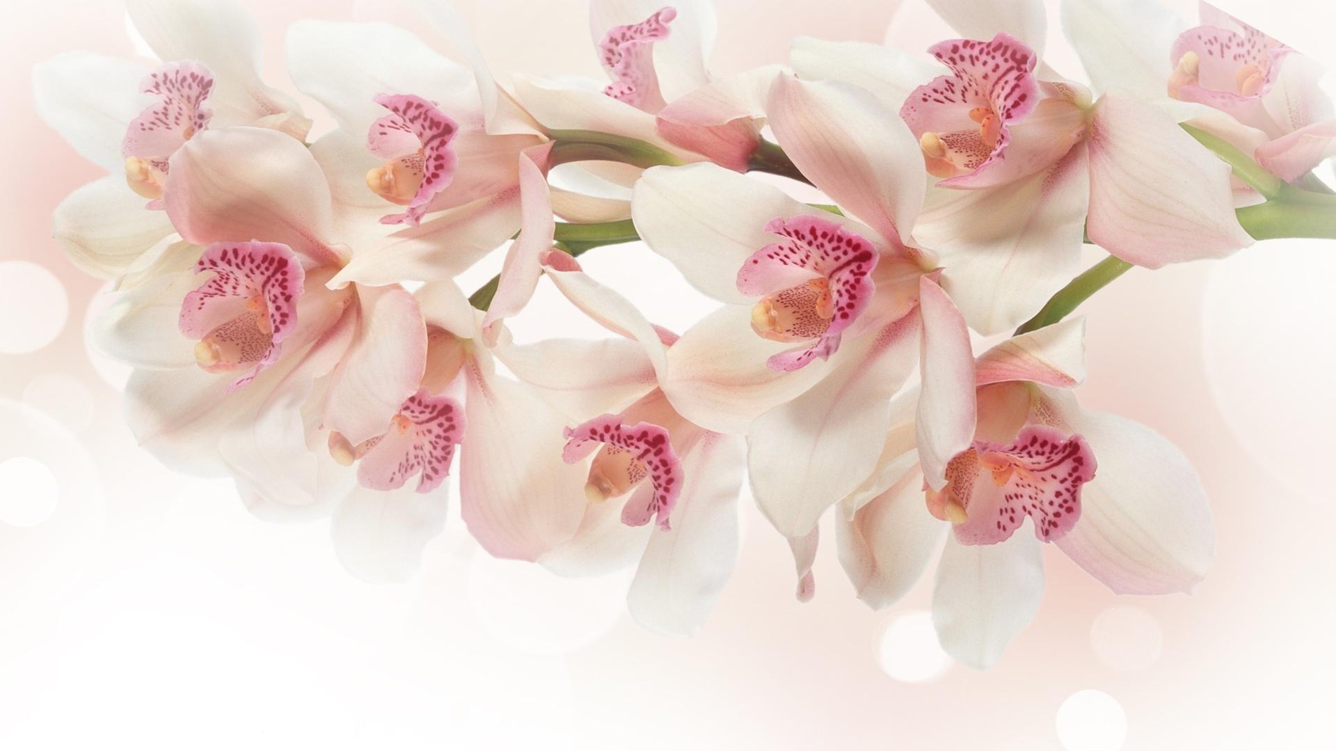 пары красивые цветы картинки и фотообои сможет одарить