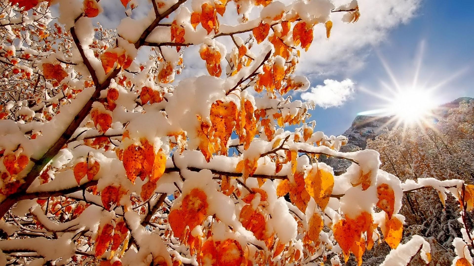 Красивые картинки природы осень зима