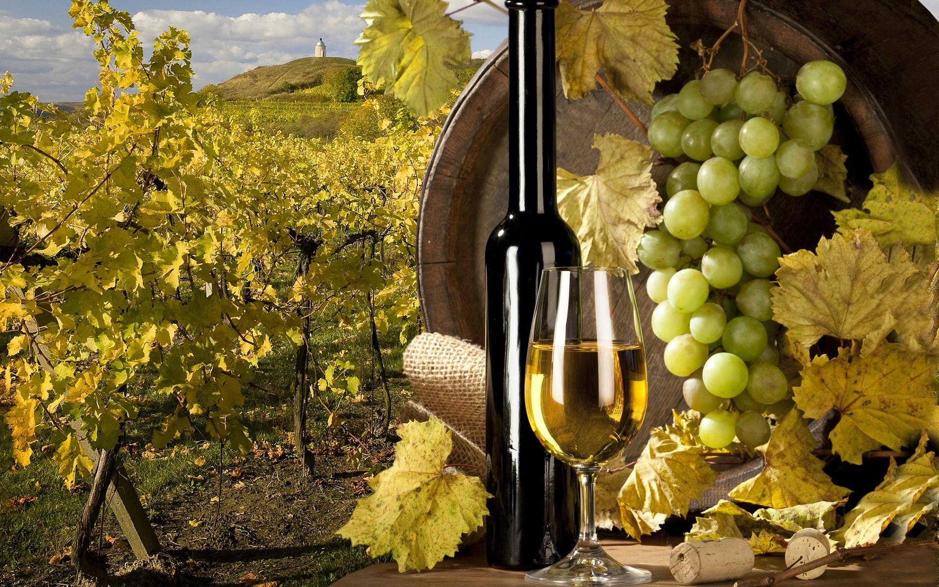 Виноград красивые картинки
