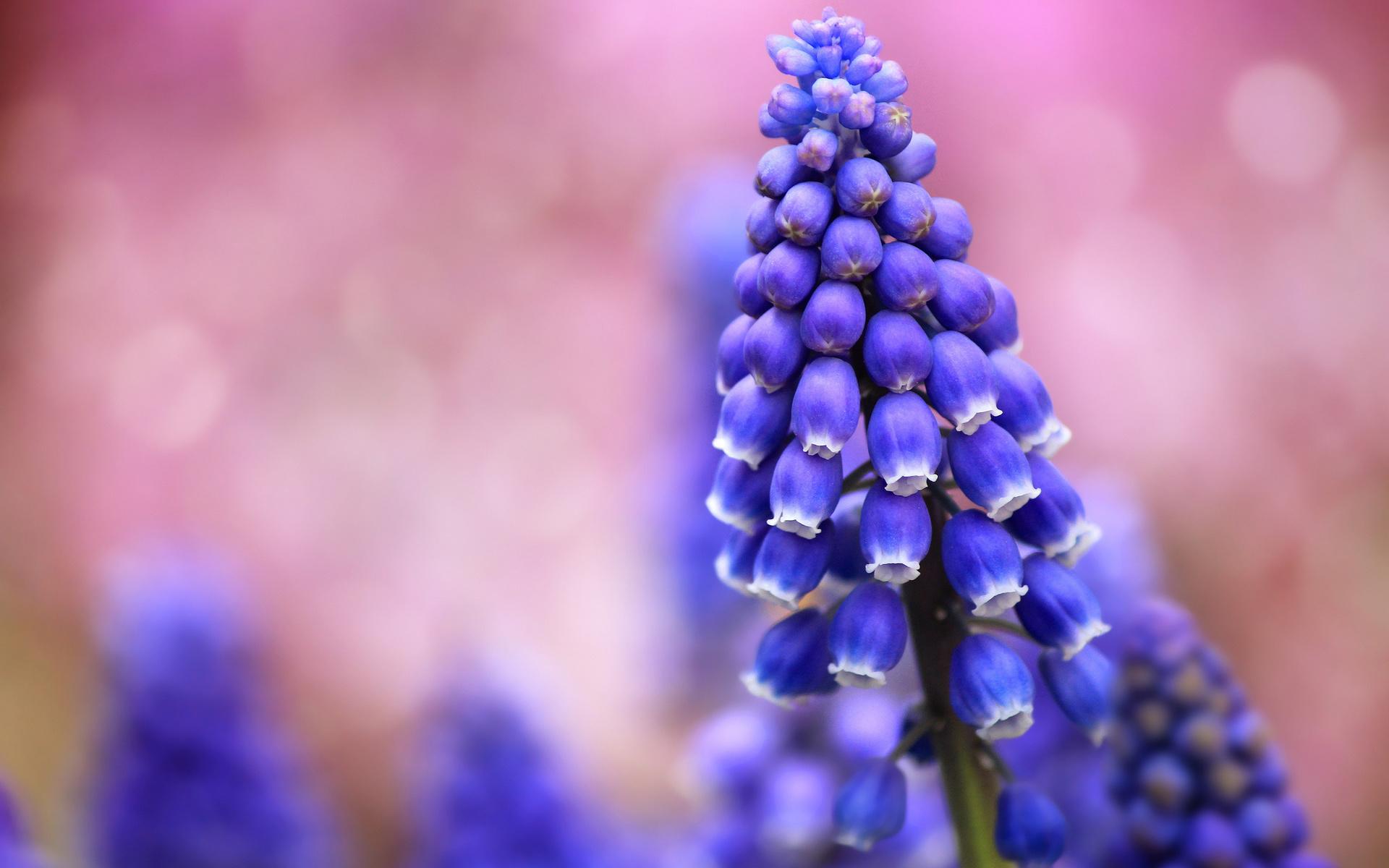 картинки с цветами фиолетово-синего ещё