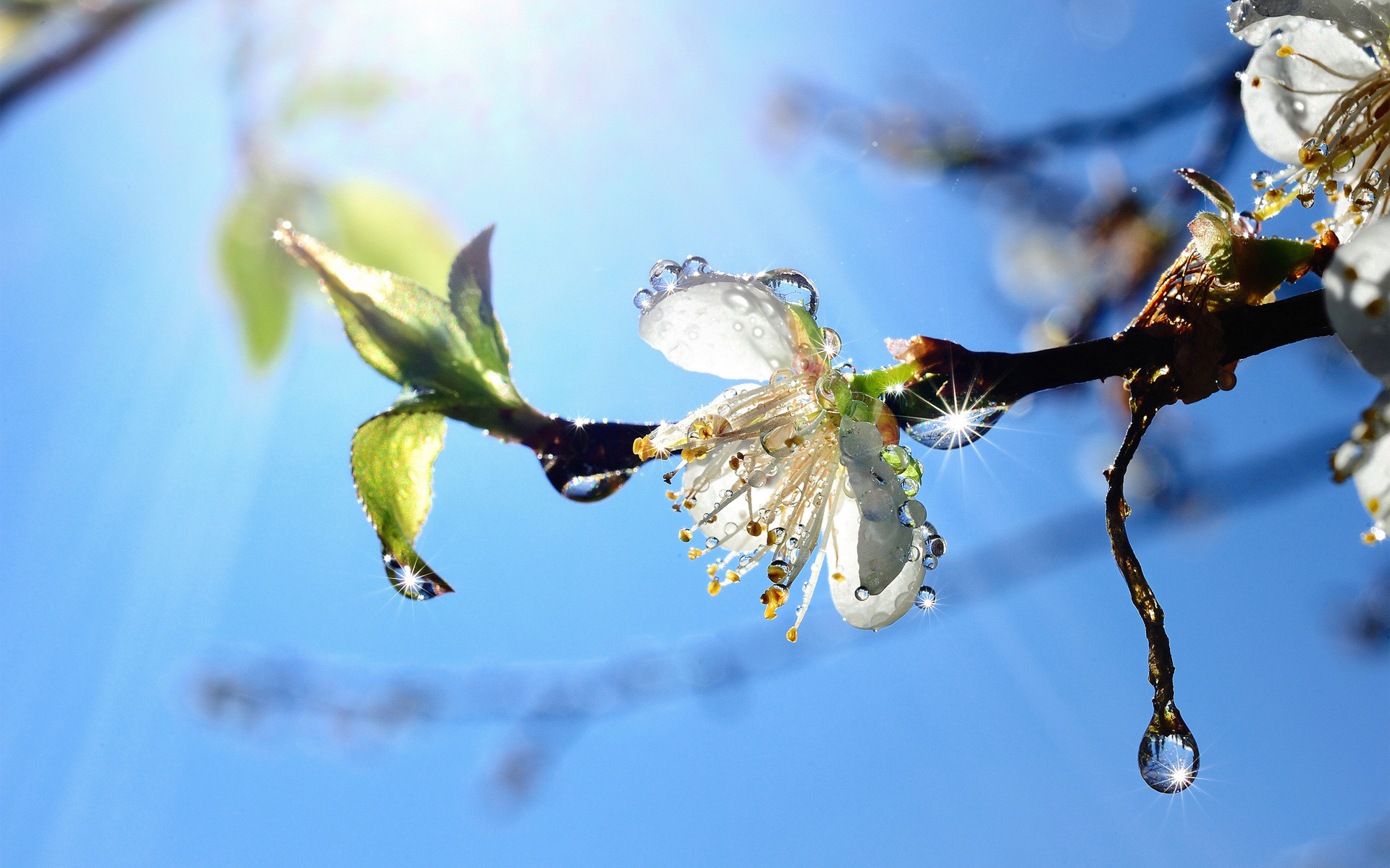 подкормку следует все весна пришла картинки тут вас