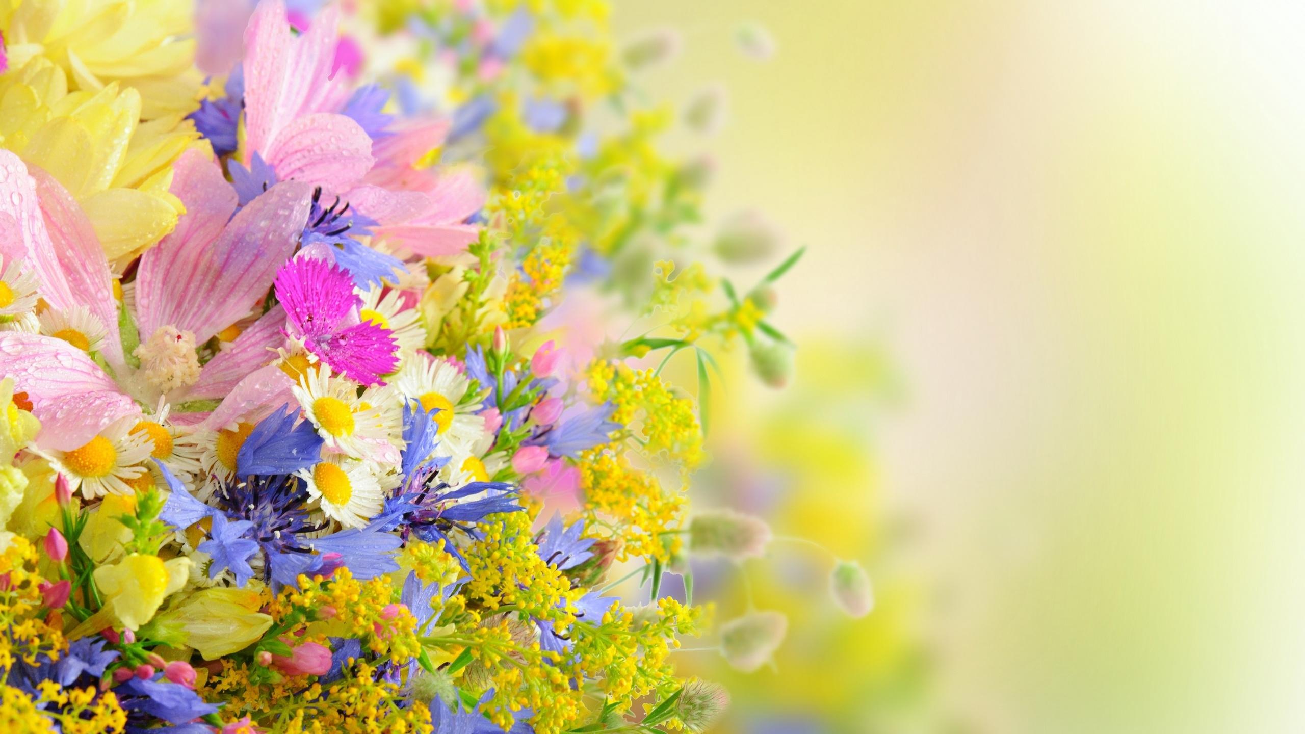 картинки с днем рождения солнце с цветами границей часто переделывают