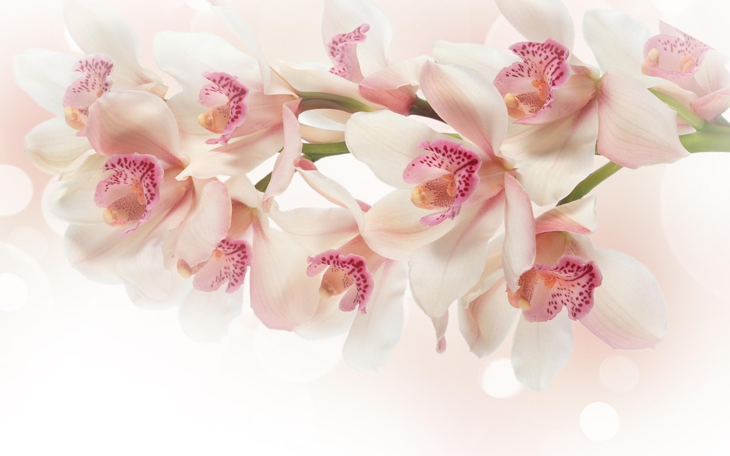 Делать, красивая открытка орхидеи