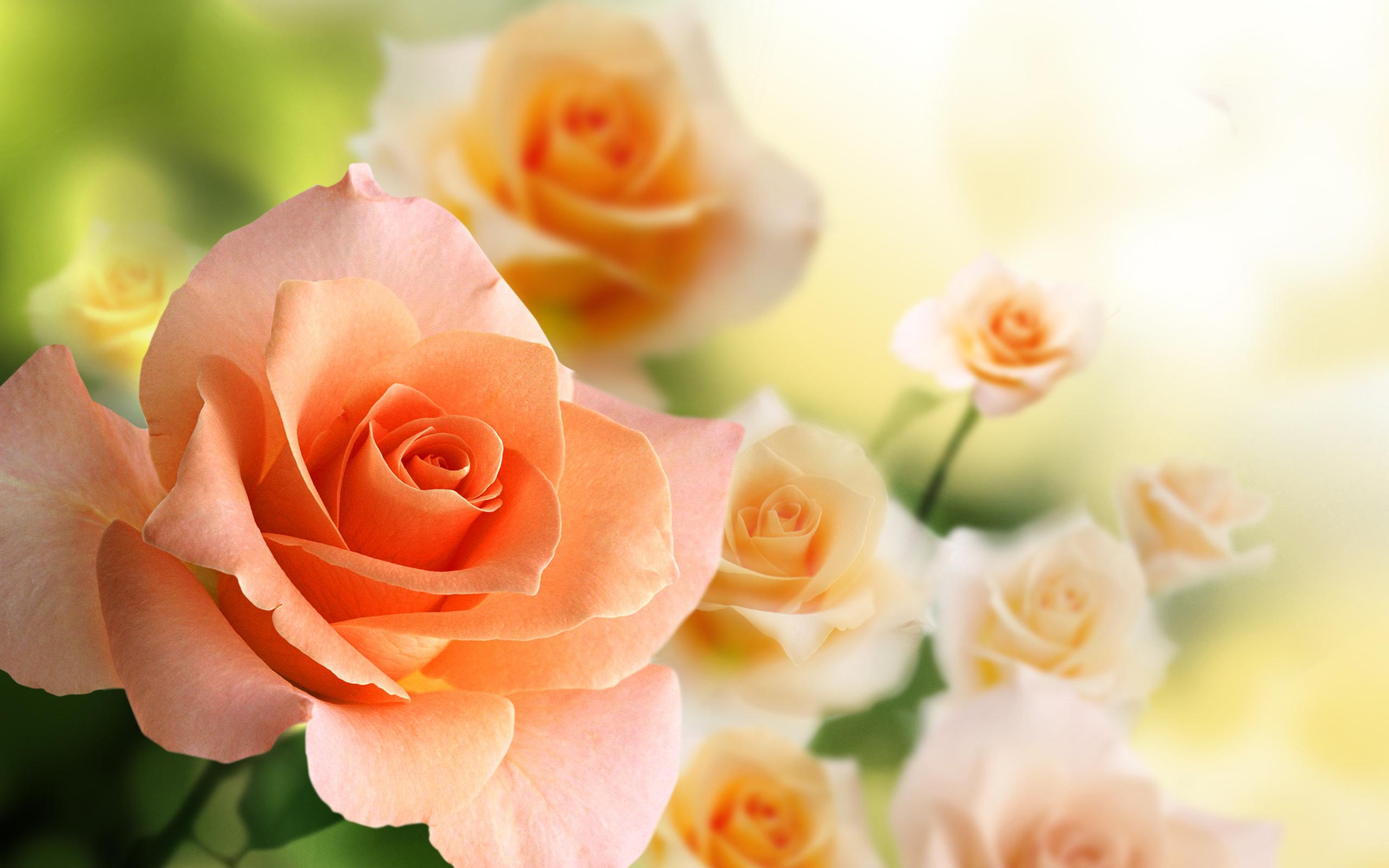 Розы картинки для открытки
