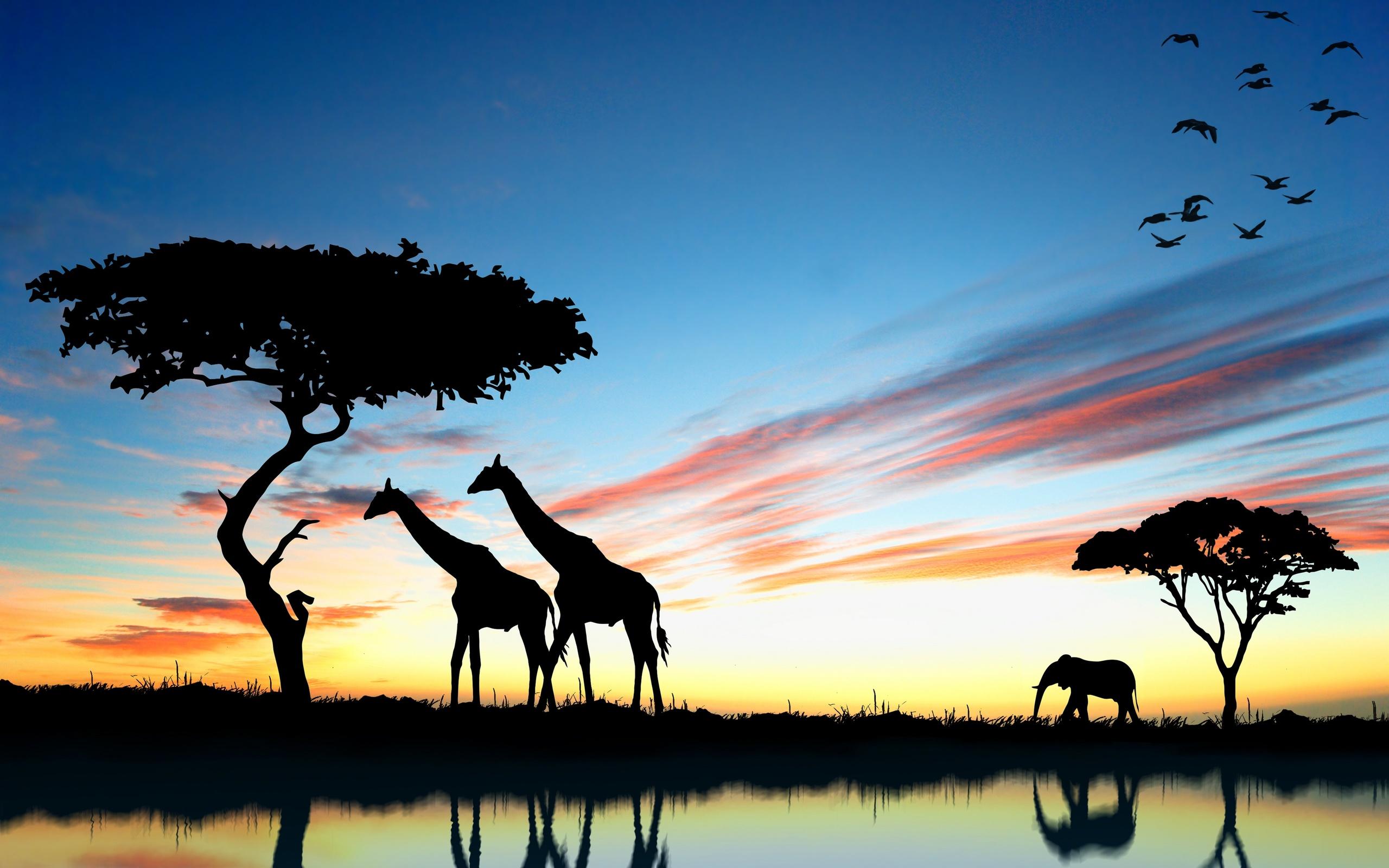 красивые картинки африка