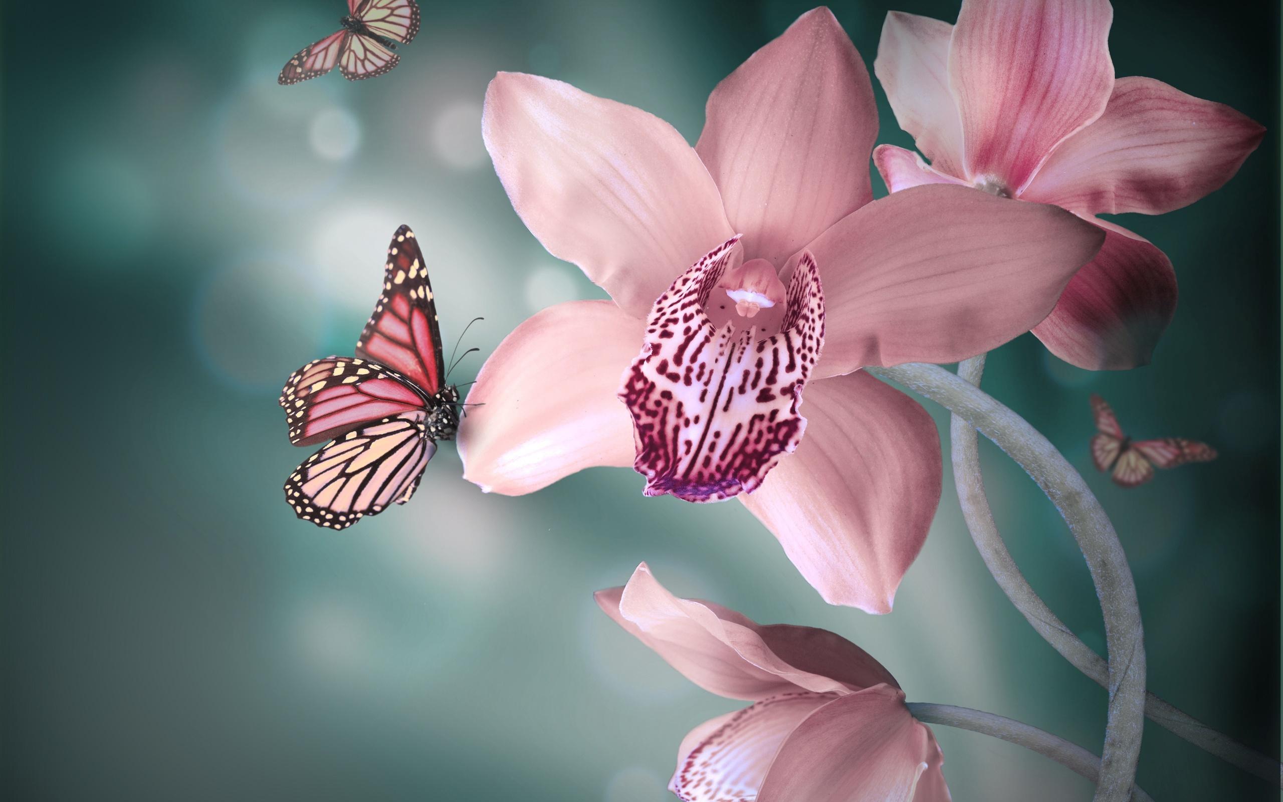 Орхидея в картинках, про разведчиков