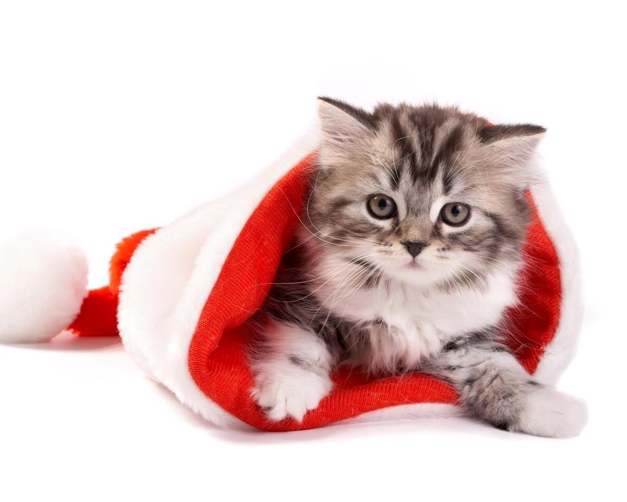 Новогодние милые картинки с котиками, открытки днем