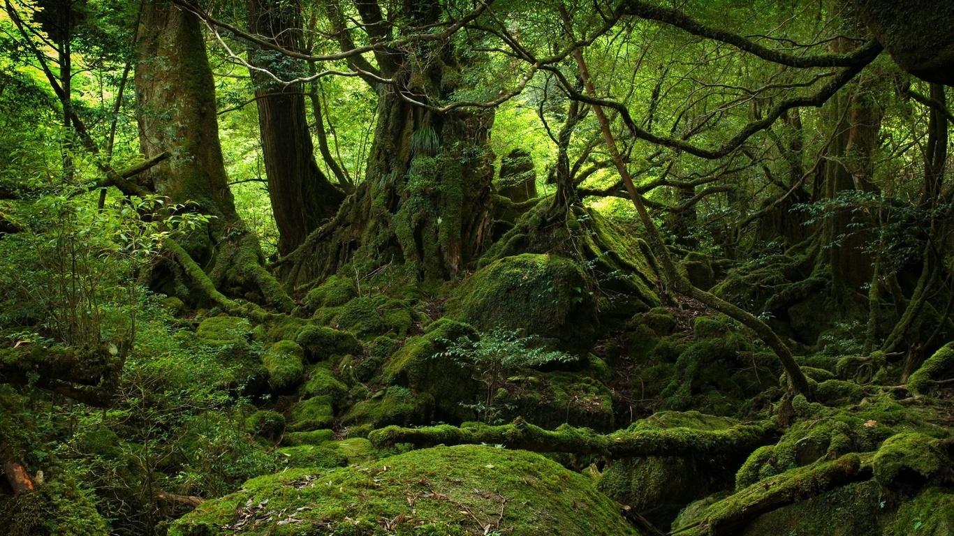 картинки густой лес словам