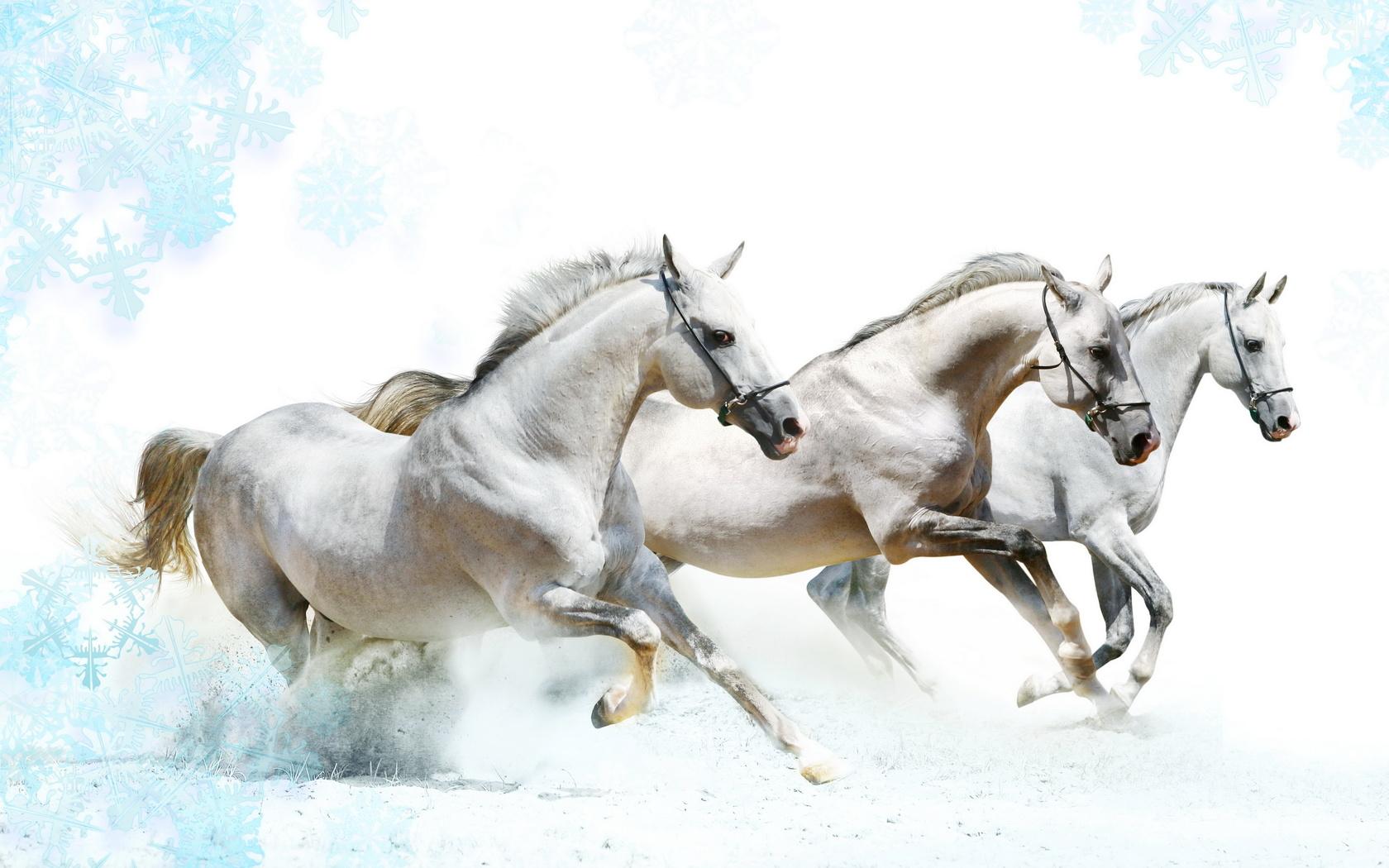 три лошадки картинки