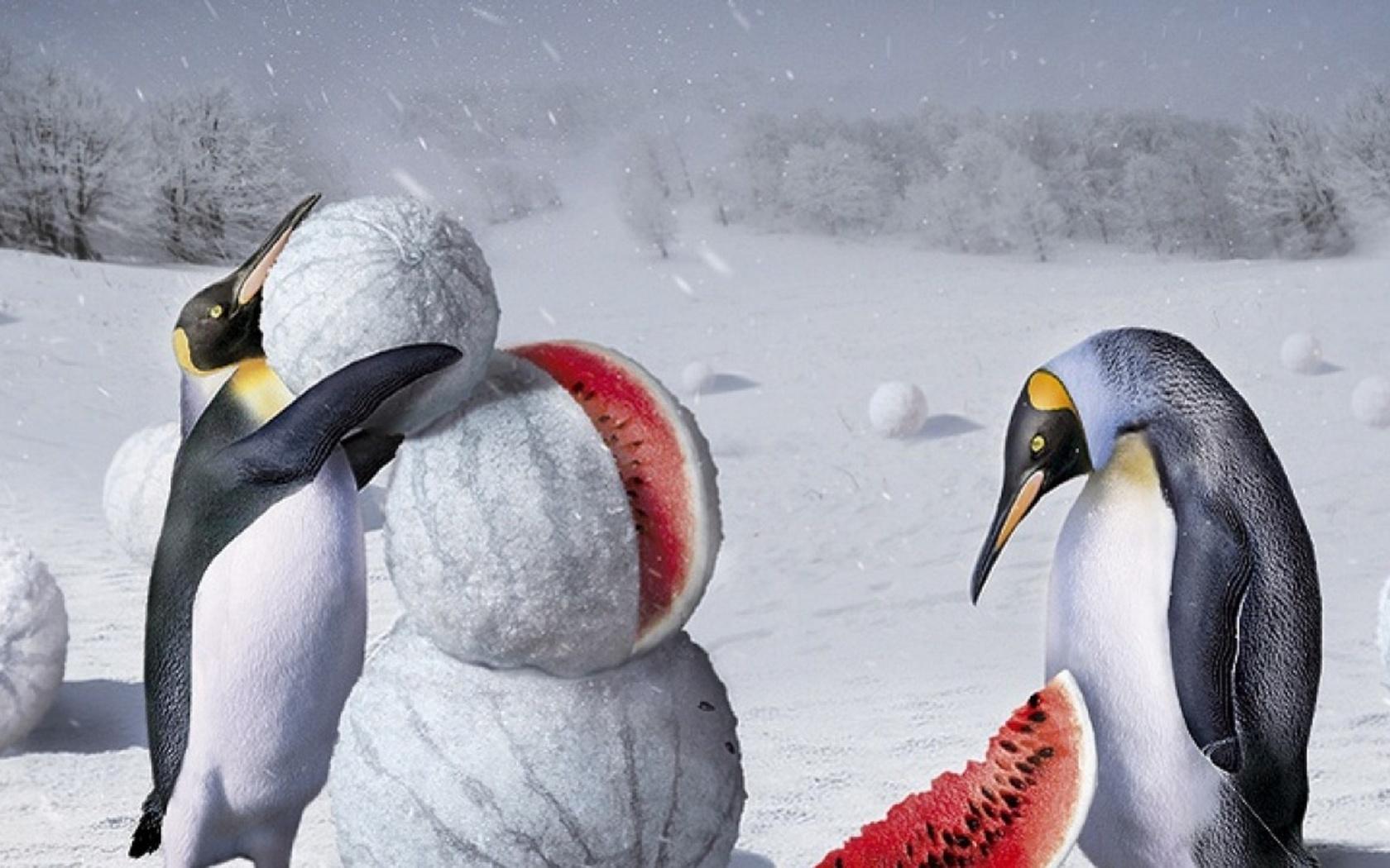 это позволяет картинки с пингвинами я тебя люблю женщины, как показывает
