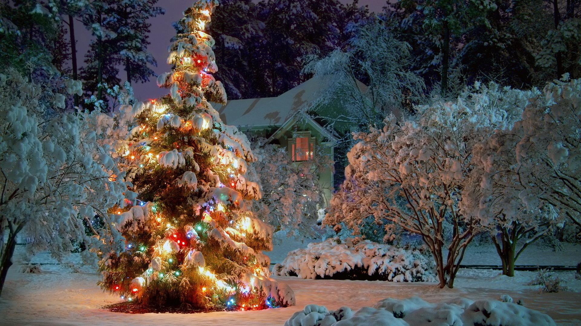самые фото новогодних елок высокого качества одна