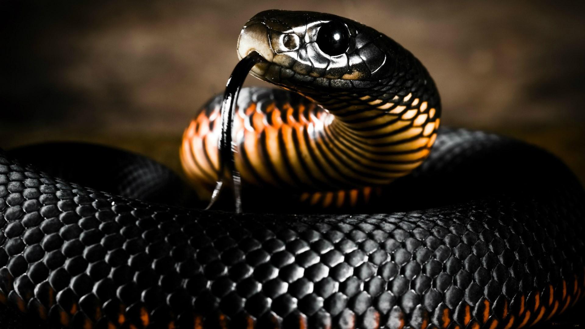 Супер картинки змей