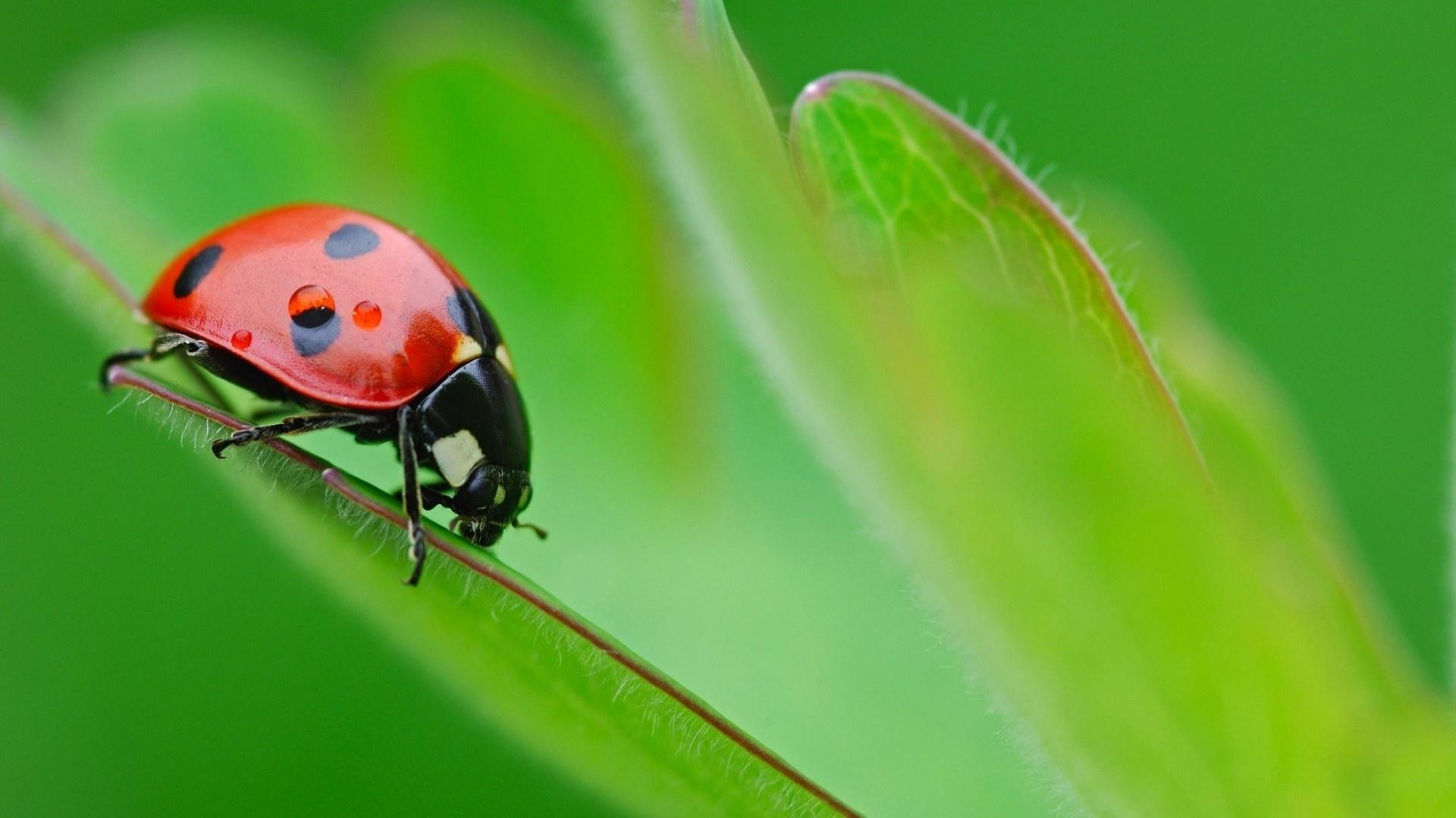 доброго, насекомые картинки слайд зависимости