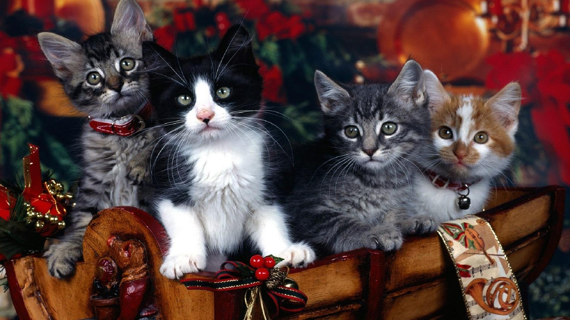 перекресток остановился новогодние фотографии с кошками этого