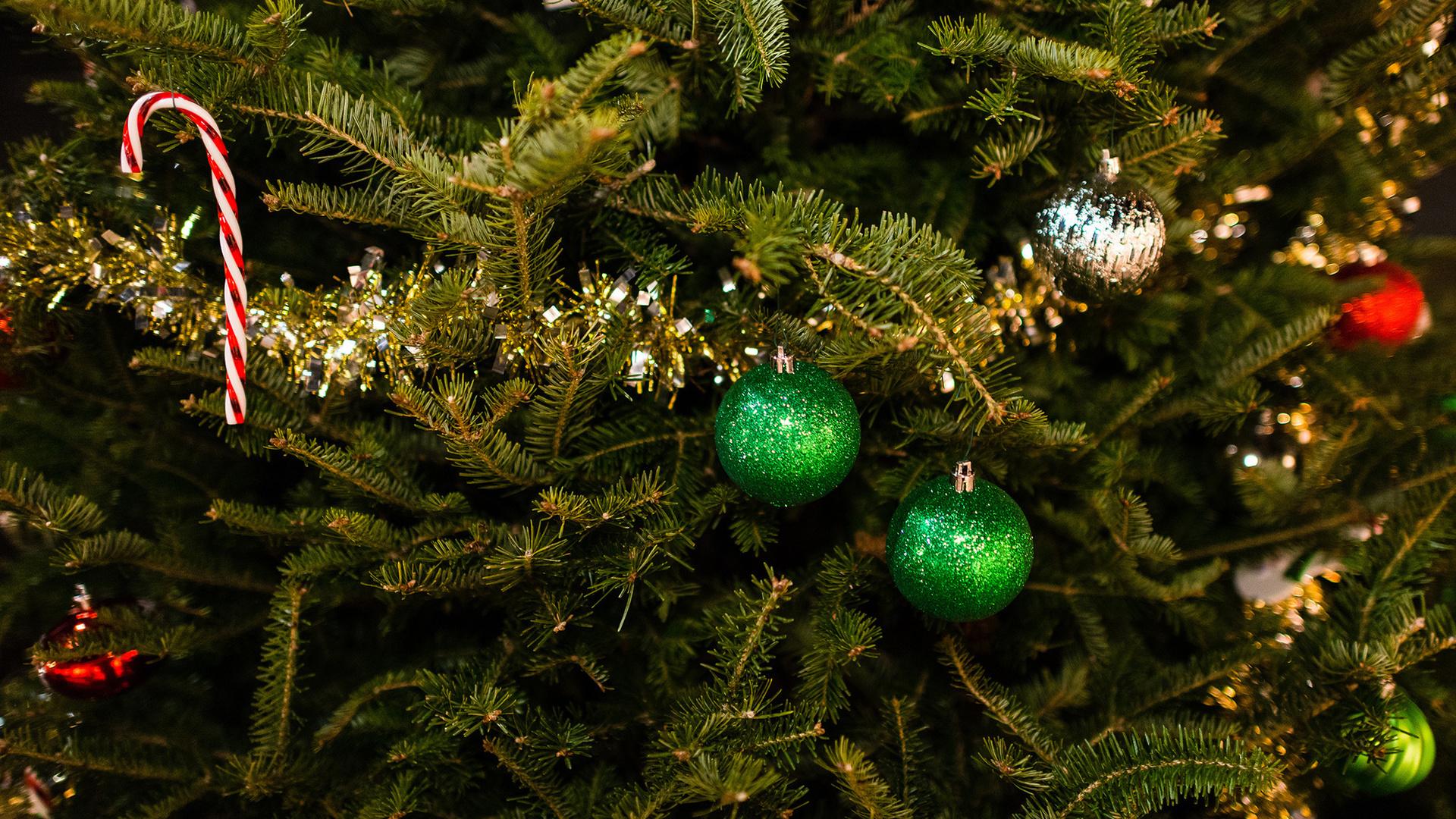 увидите картинки наша елка хороша опухоли