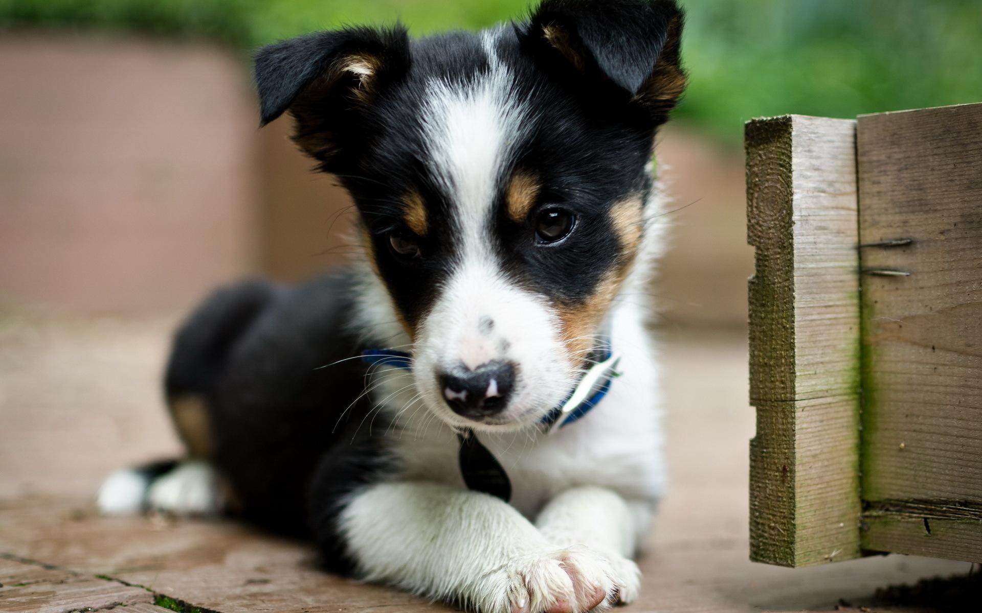 картинки с щеночками наиболее популярные тренды