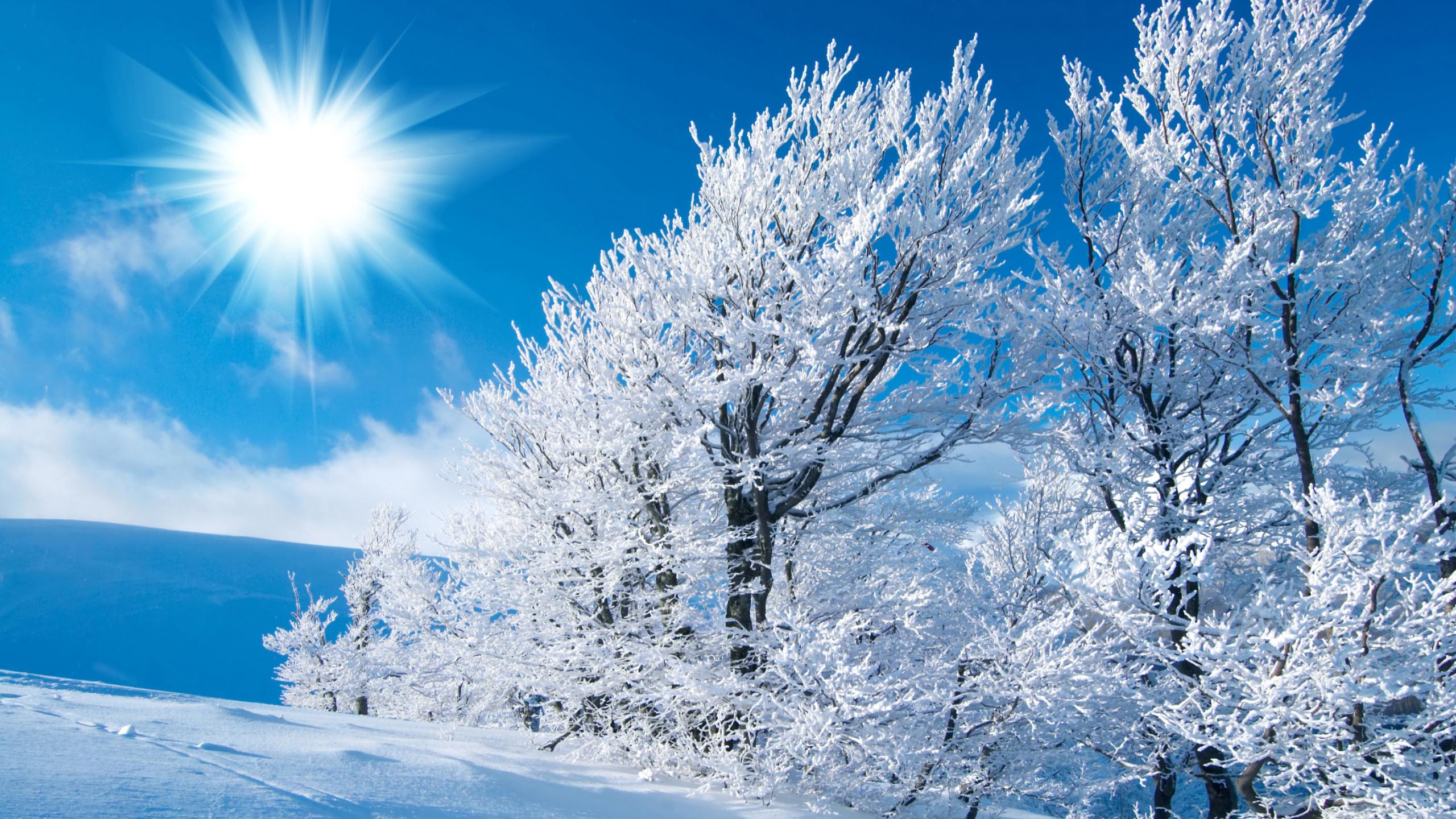 картинки очень хорошего качества зимние москвина потрясла