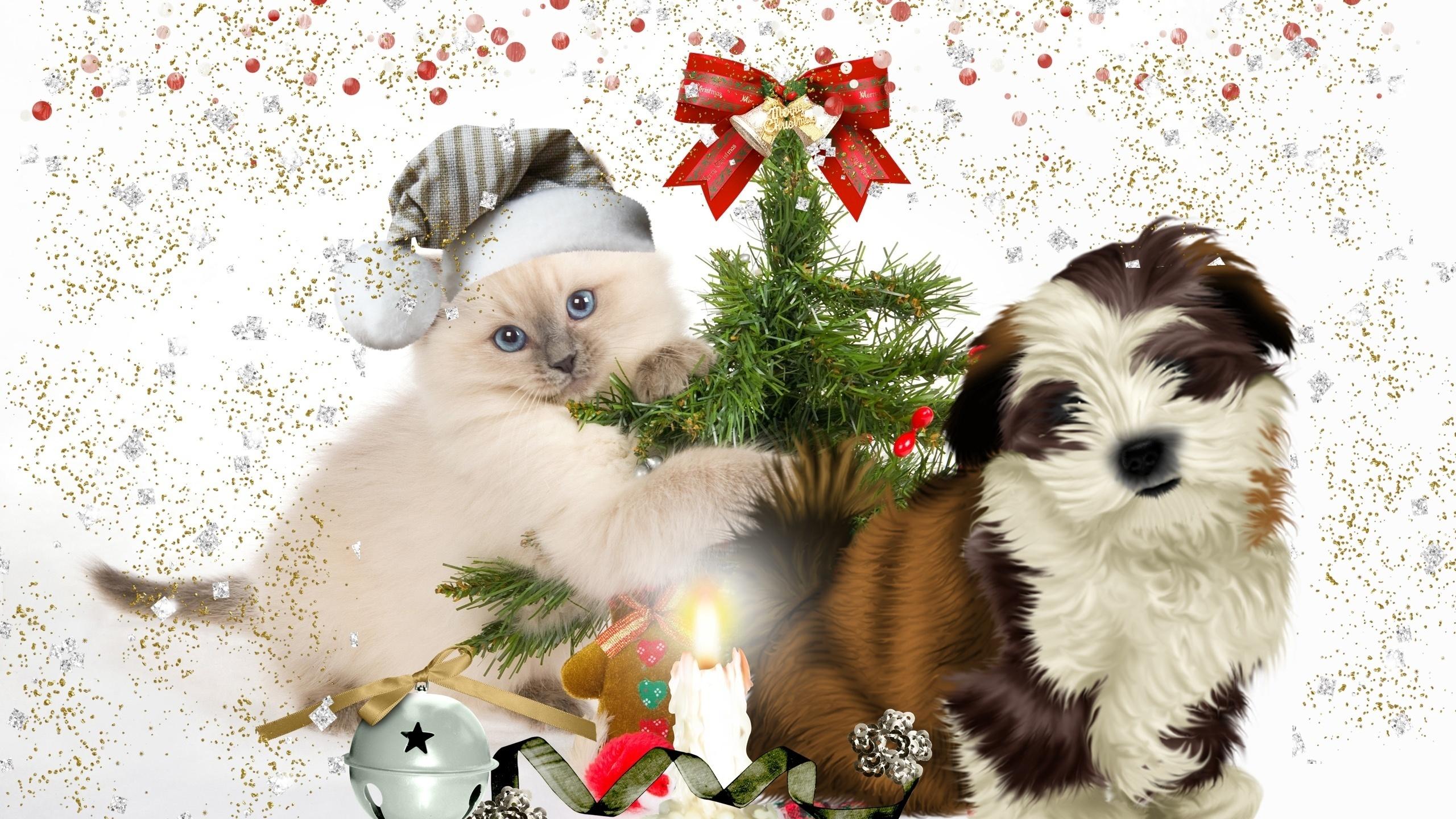 Новогодние картинки котенок и щенок