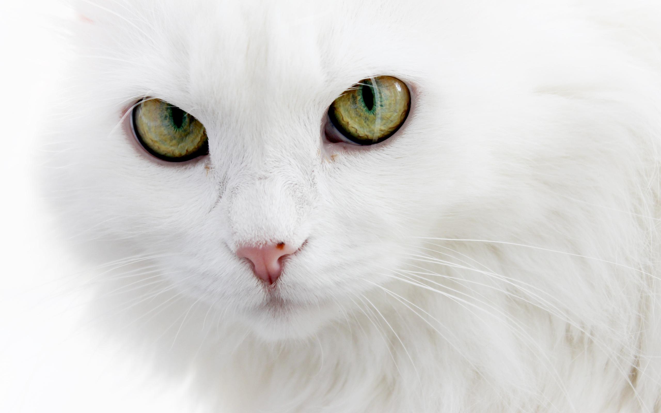 картинки аватарки белый кот сложная часть резка