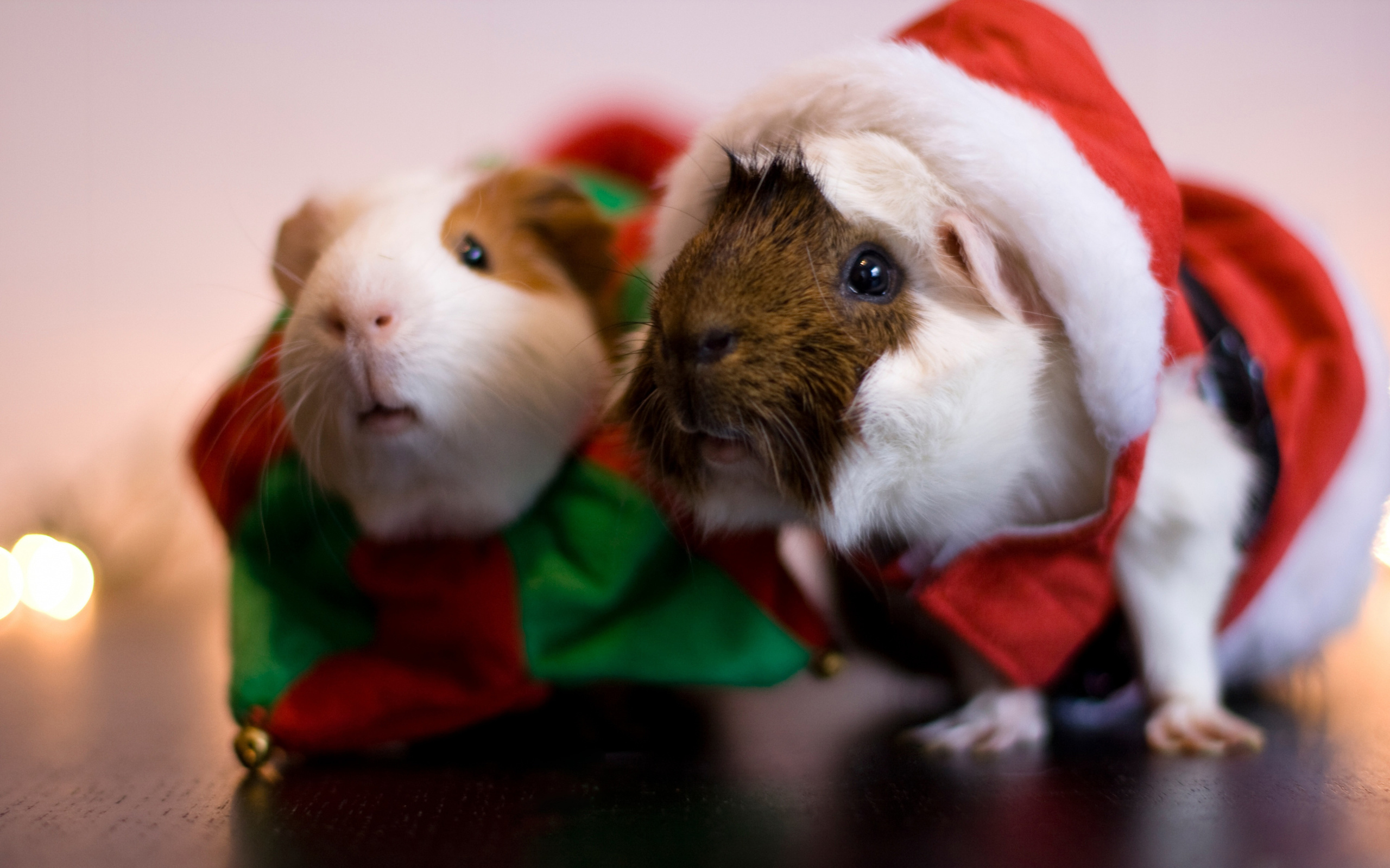 Цветочек, картинки смешные новогодние свинки