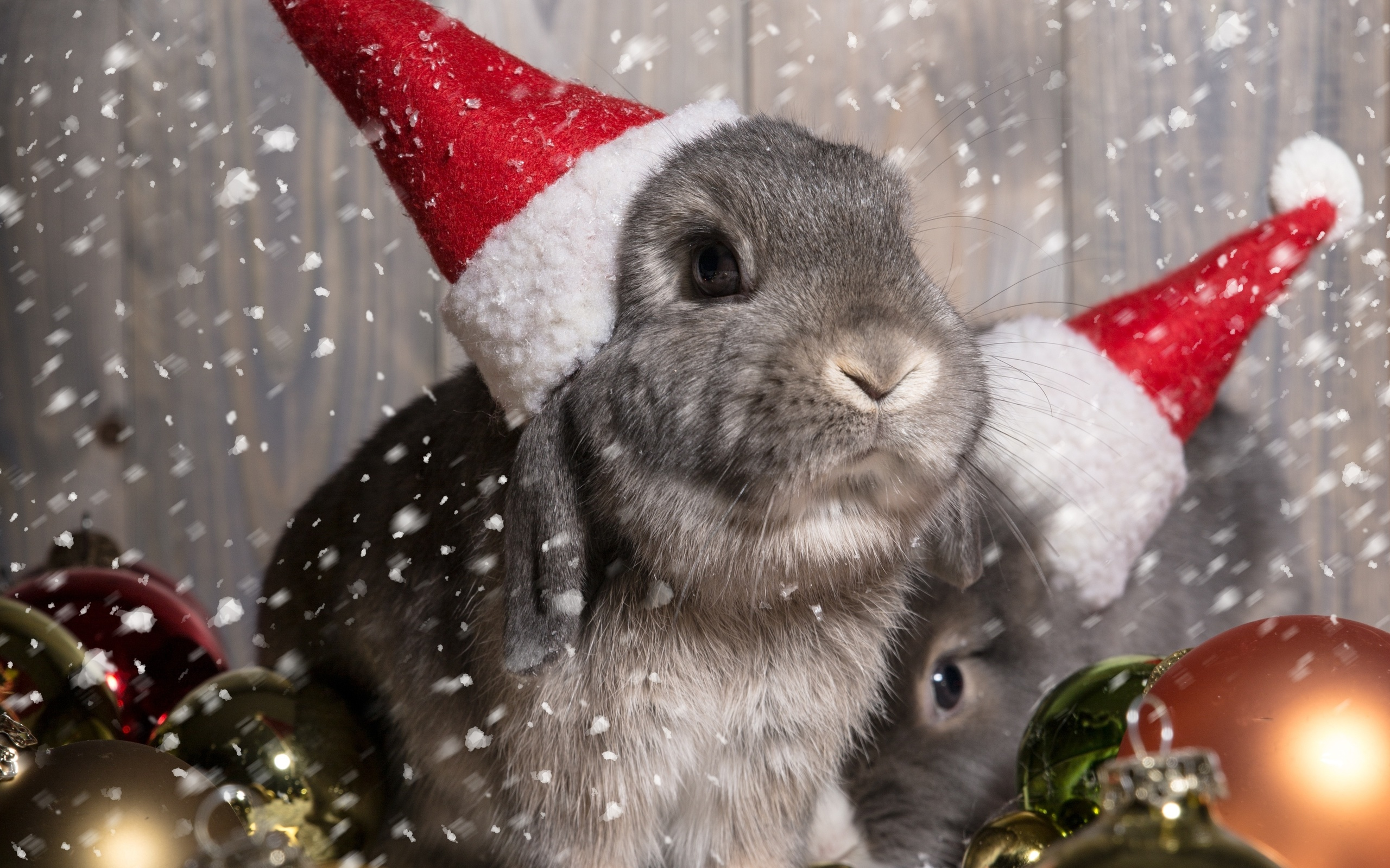 Картинка на новый год животные