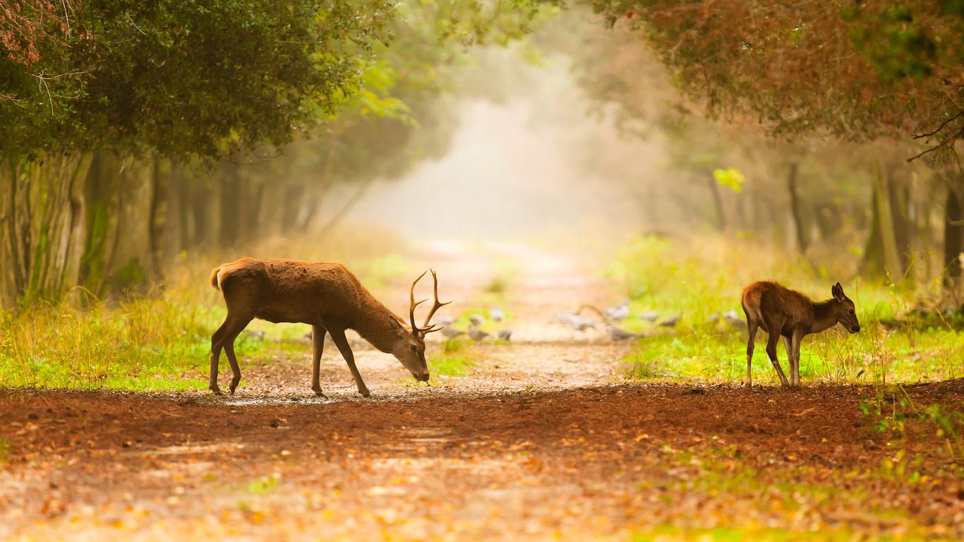 Обои туман дорога осень лес природа картинки на