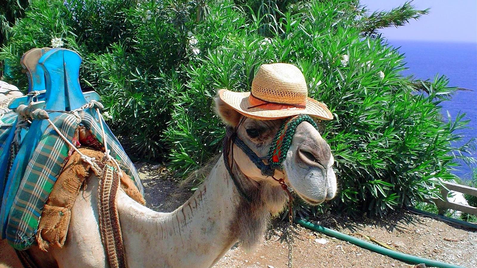 Днем рождения, смешные картинки толстая женщина на верблюде