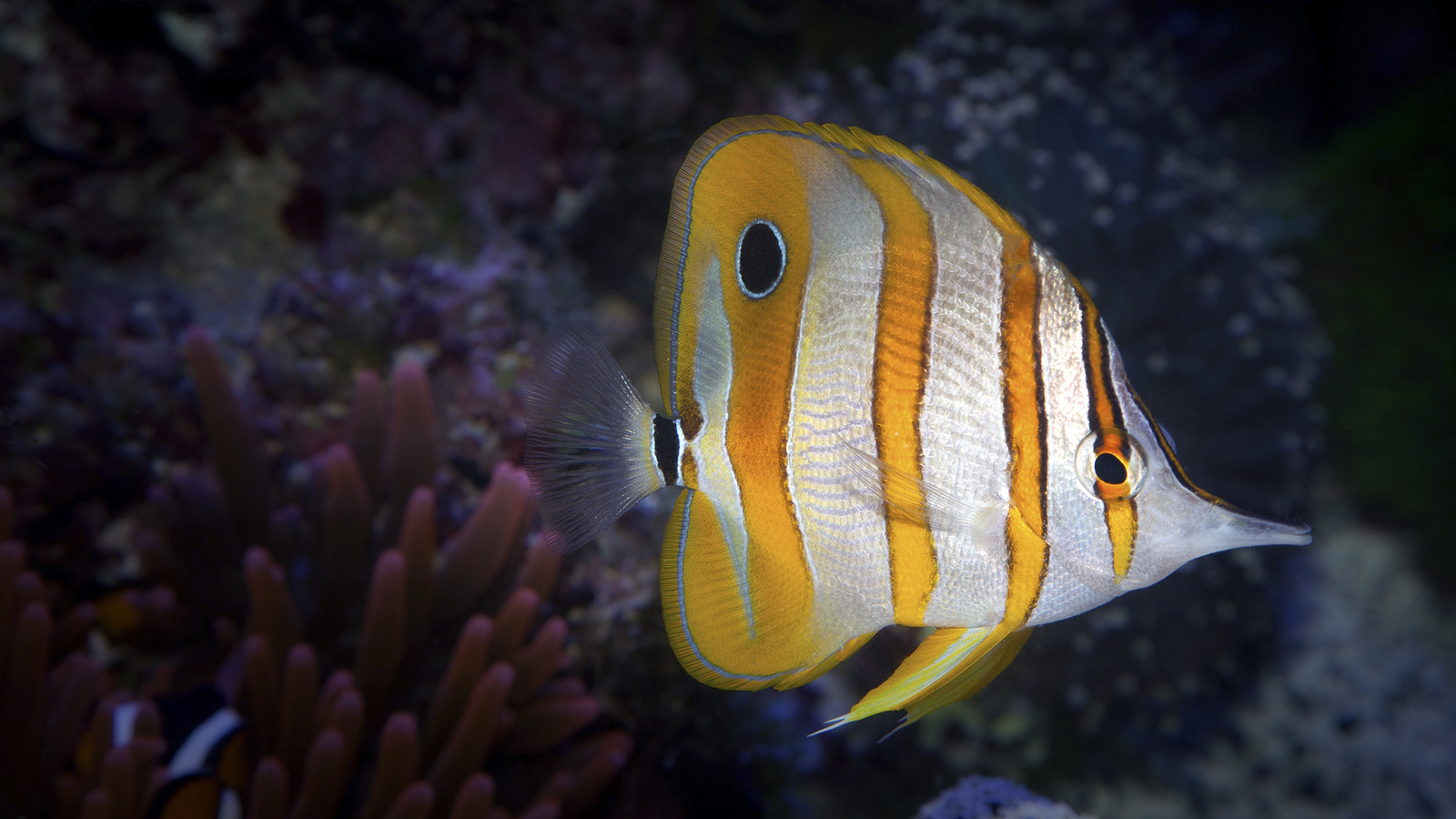 Картинки фото рыбки