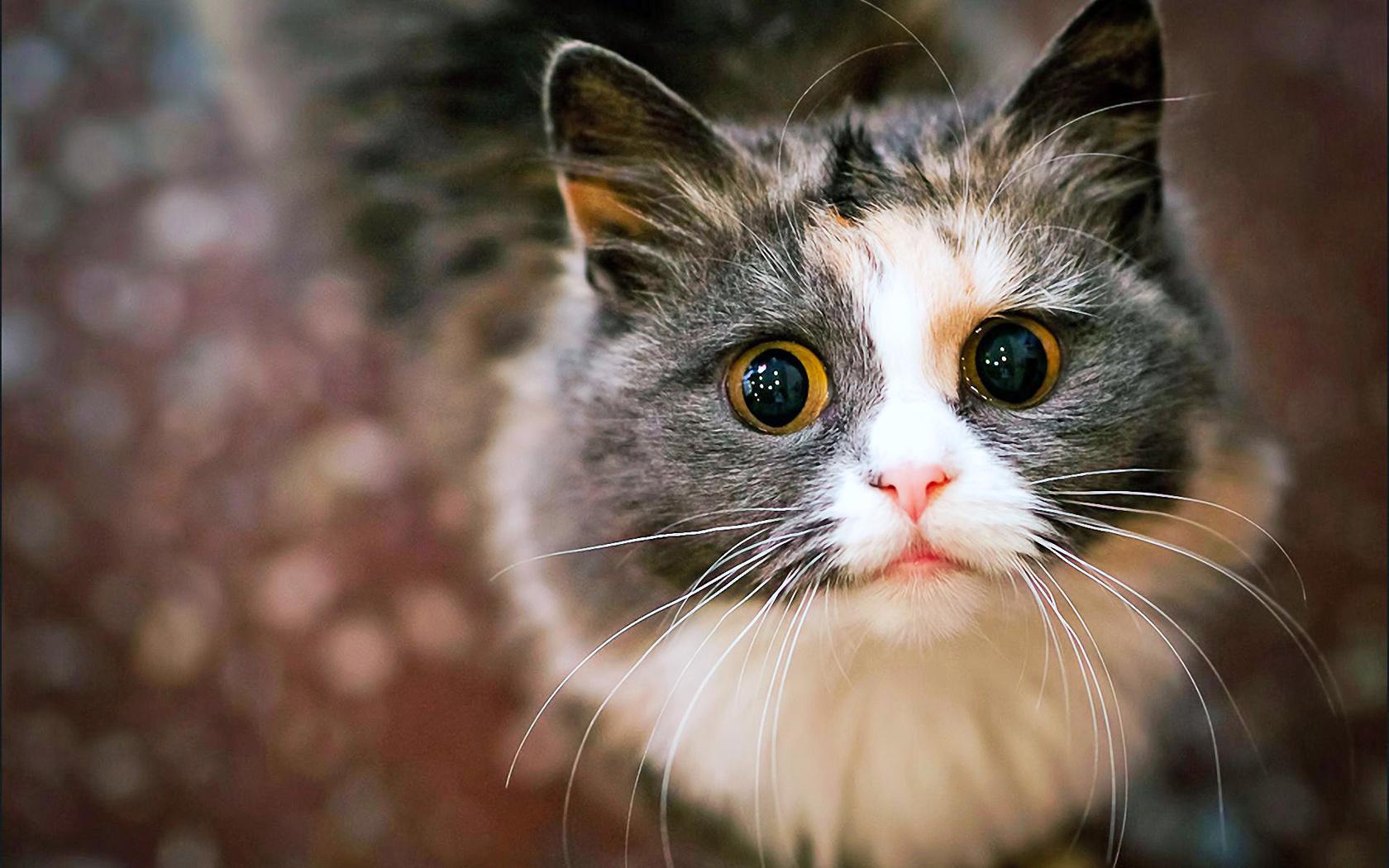 показать фото котиков этом