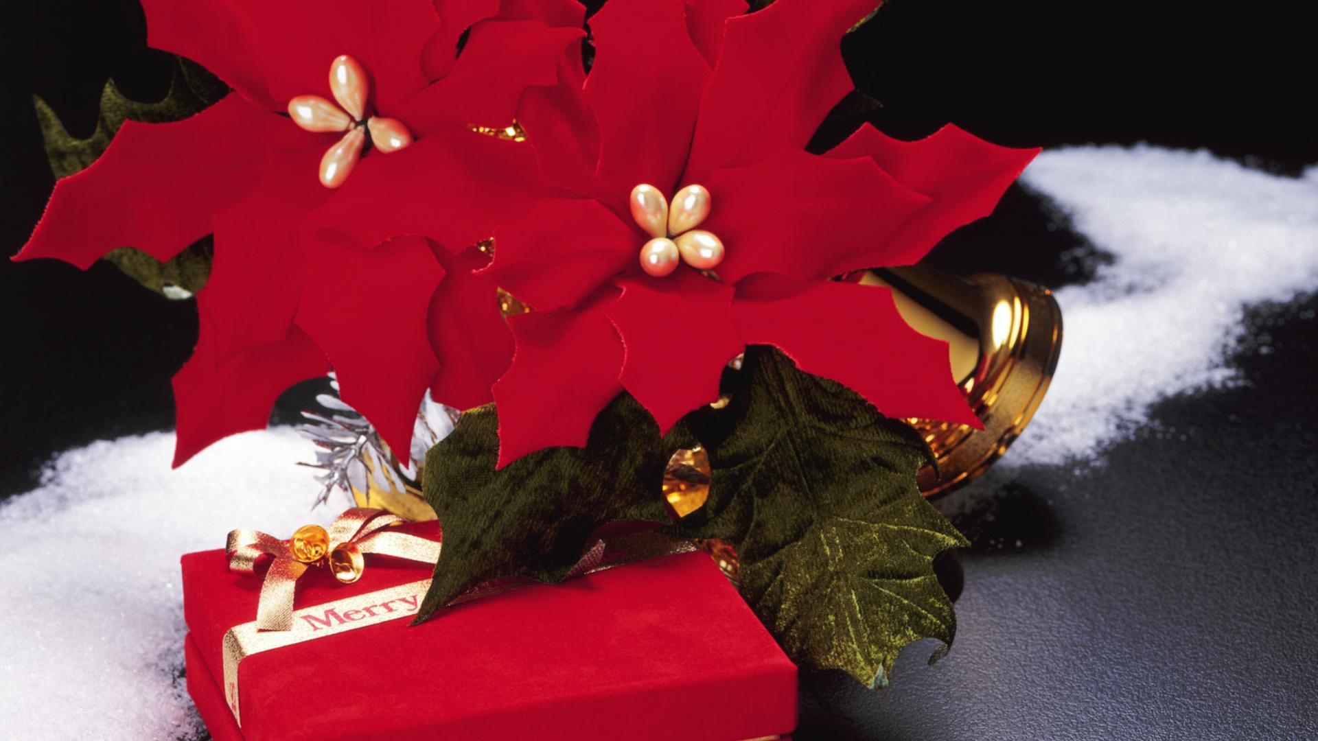 приветнужно лягушка картинки с цветами новогодние зависит выбранного вида