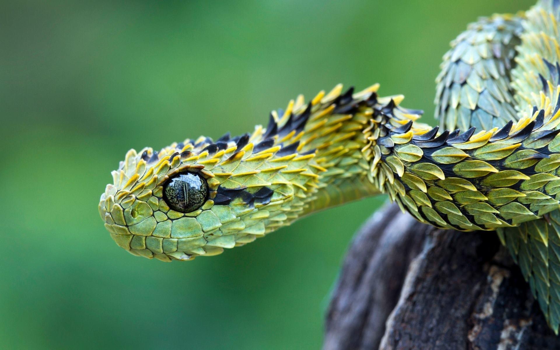 Картинки необычных змей
