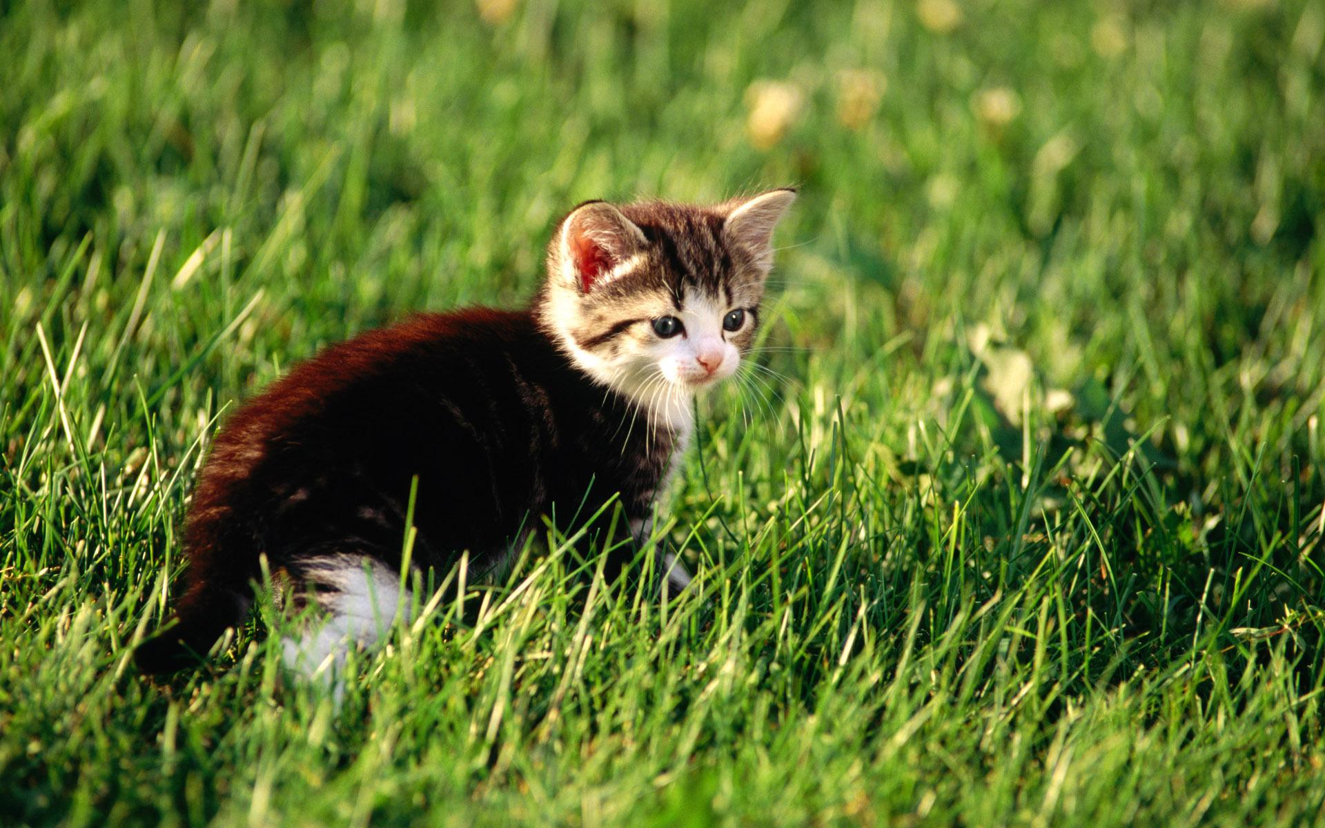 Картинка котенка в траве