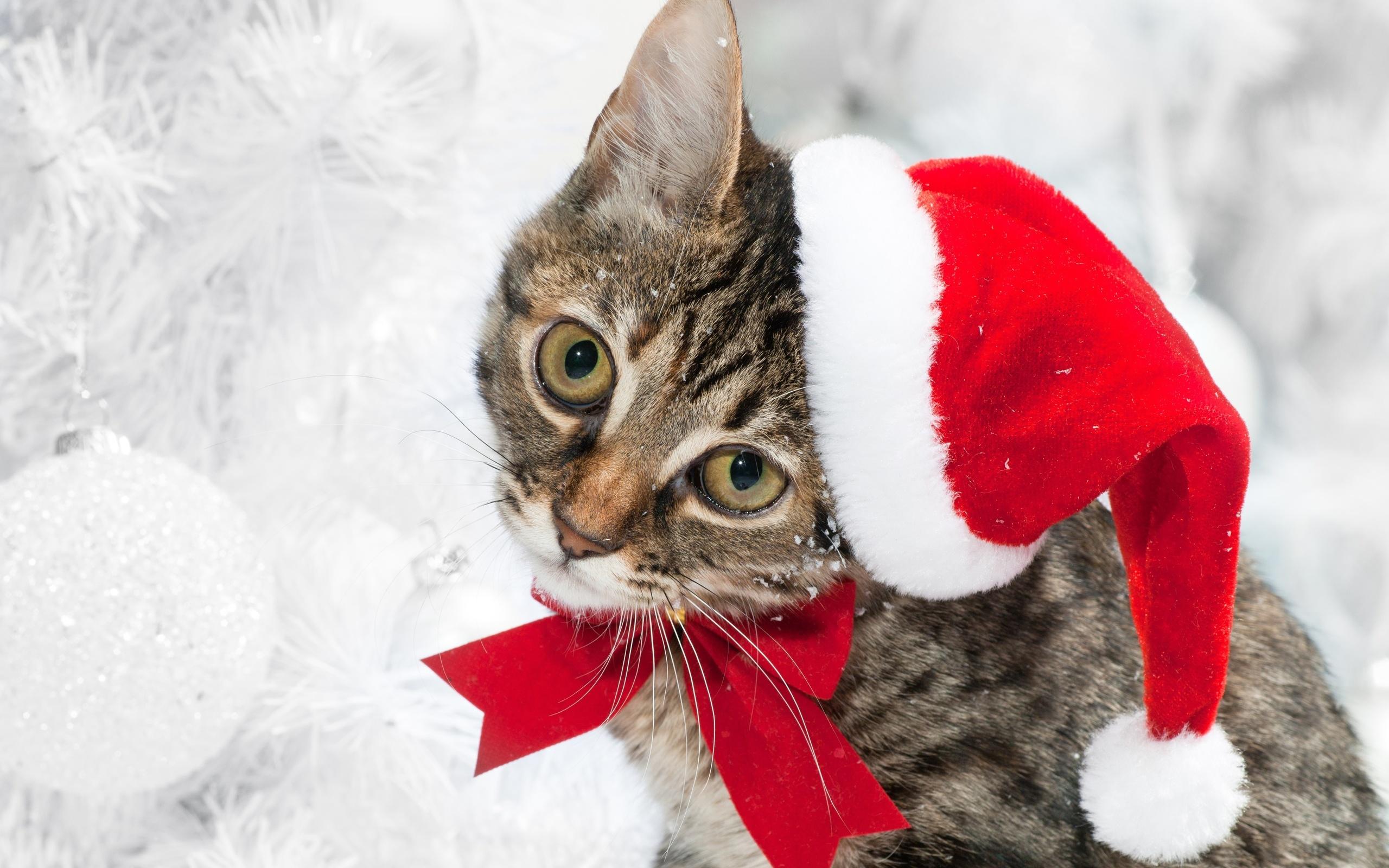 Фото новогодних кошек