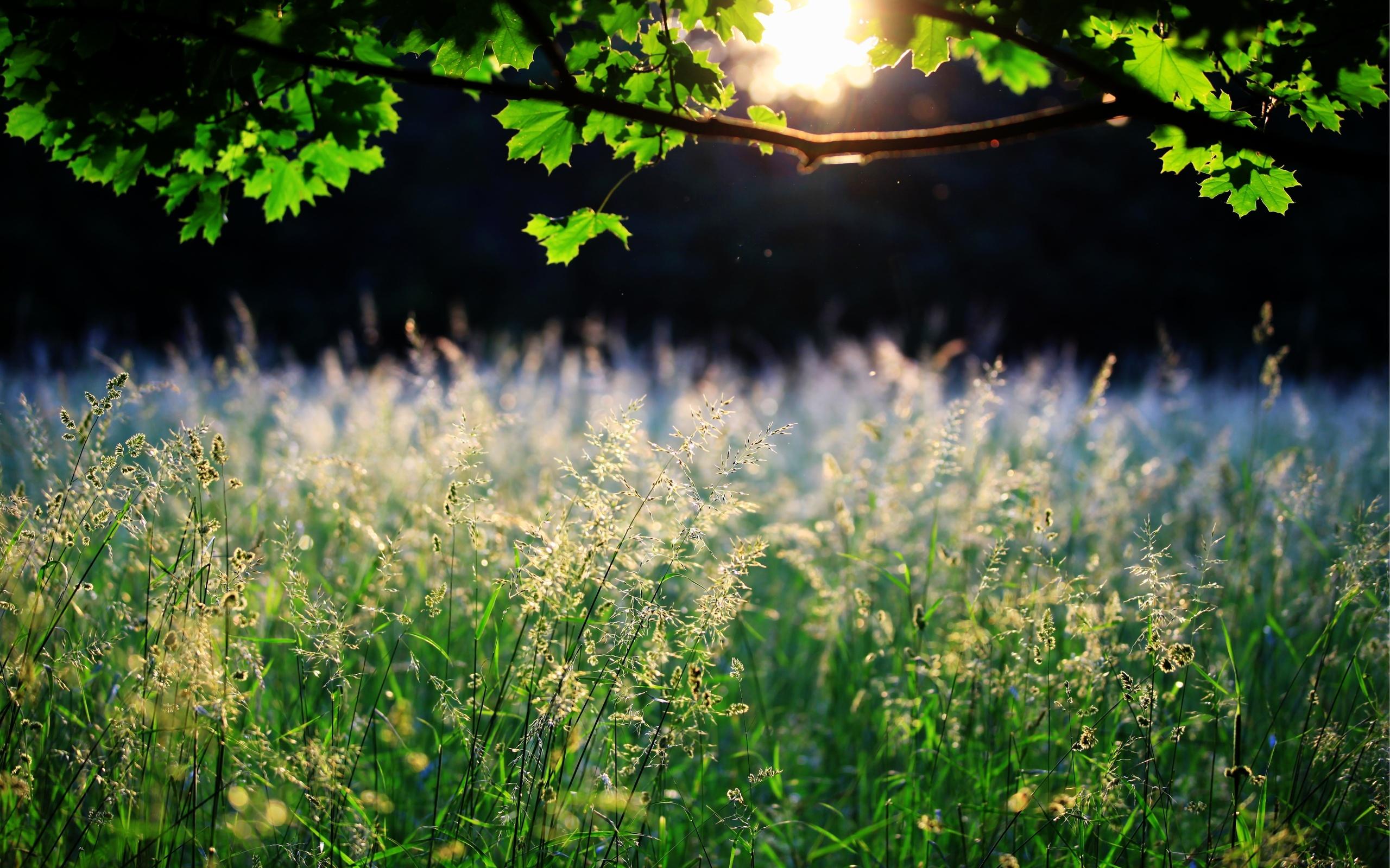 лето трава солнце картинки процессе жарки