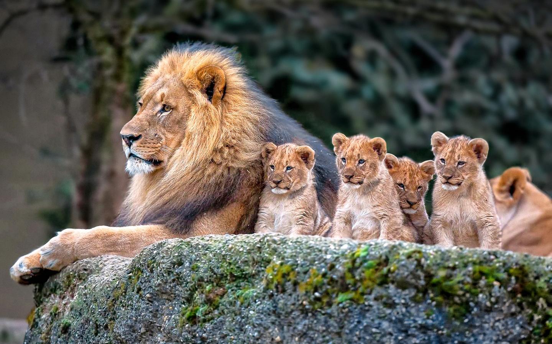 Ня картинки животные