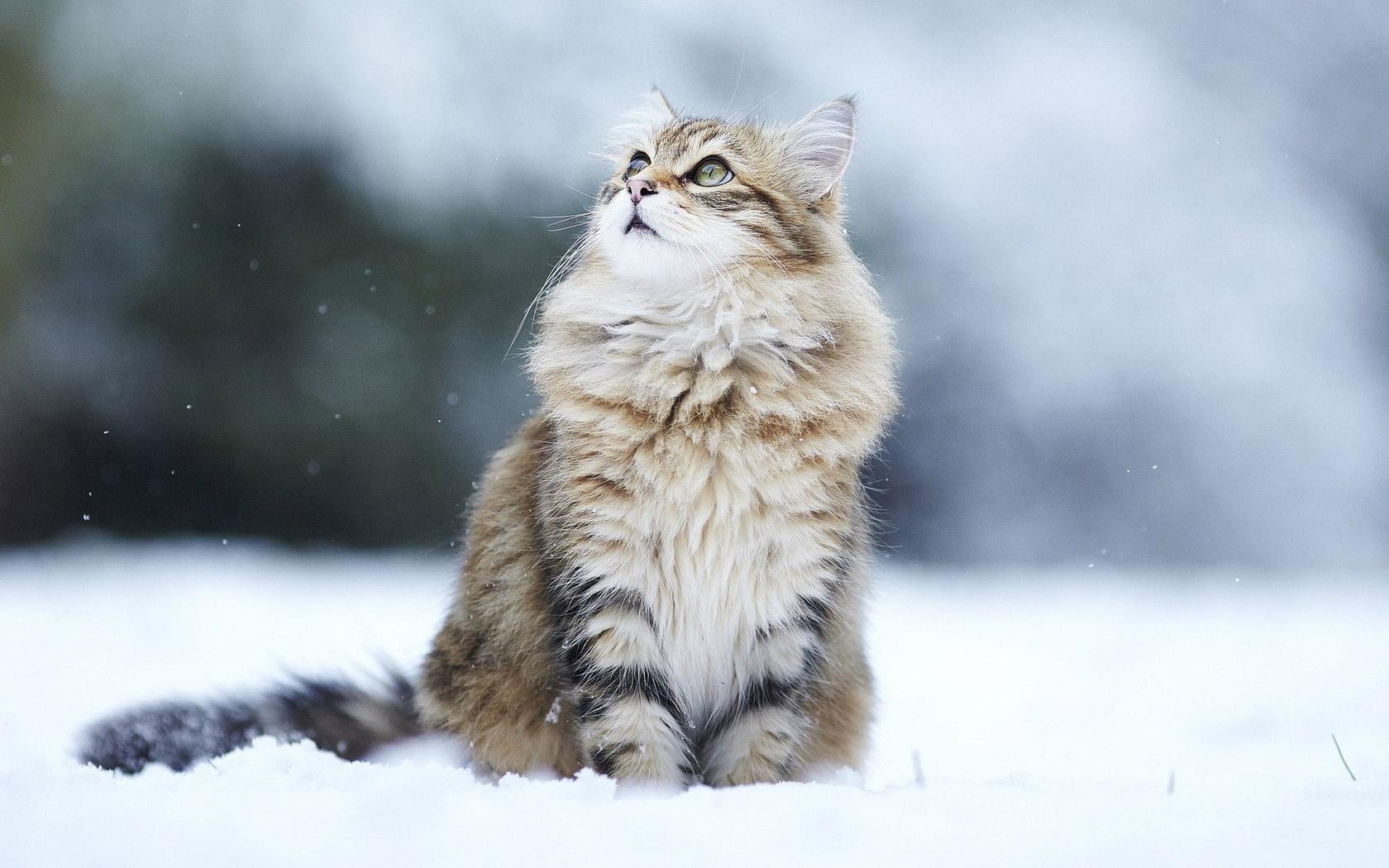 Зима картинки с котами