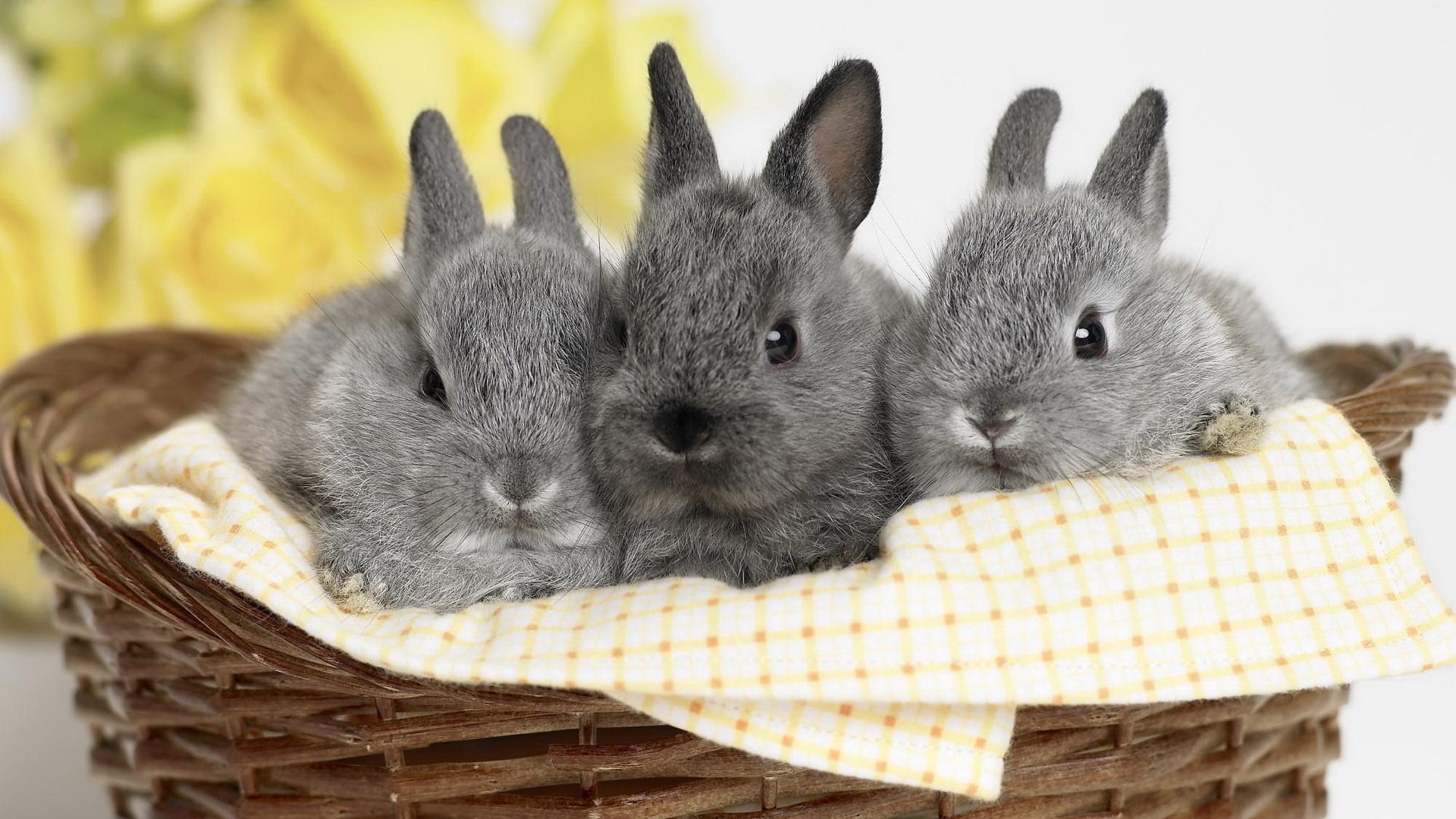 картинки с кроликами милые тут случайно