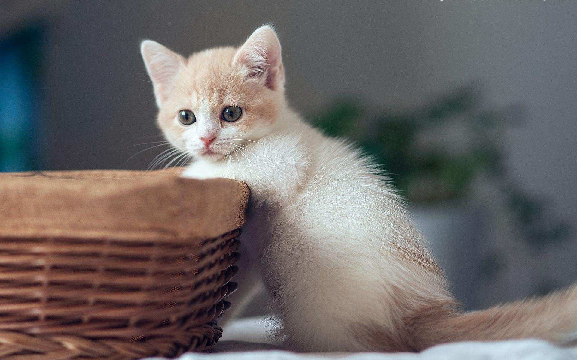 картинки светлых котят платья должны иметь