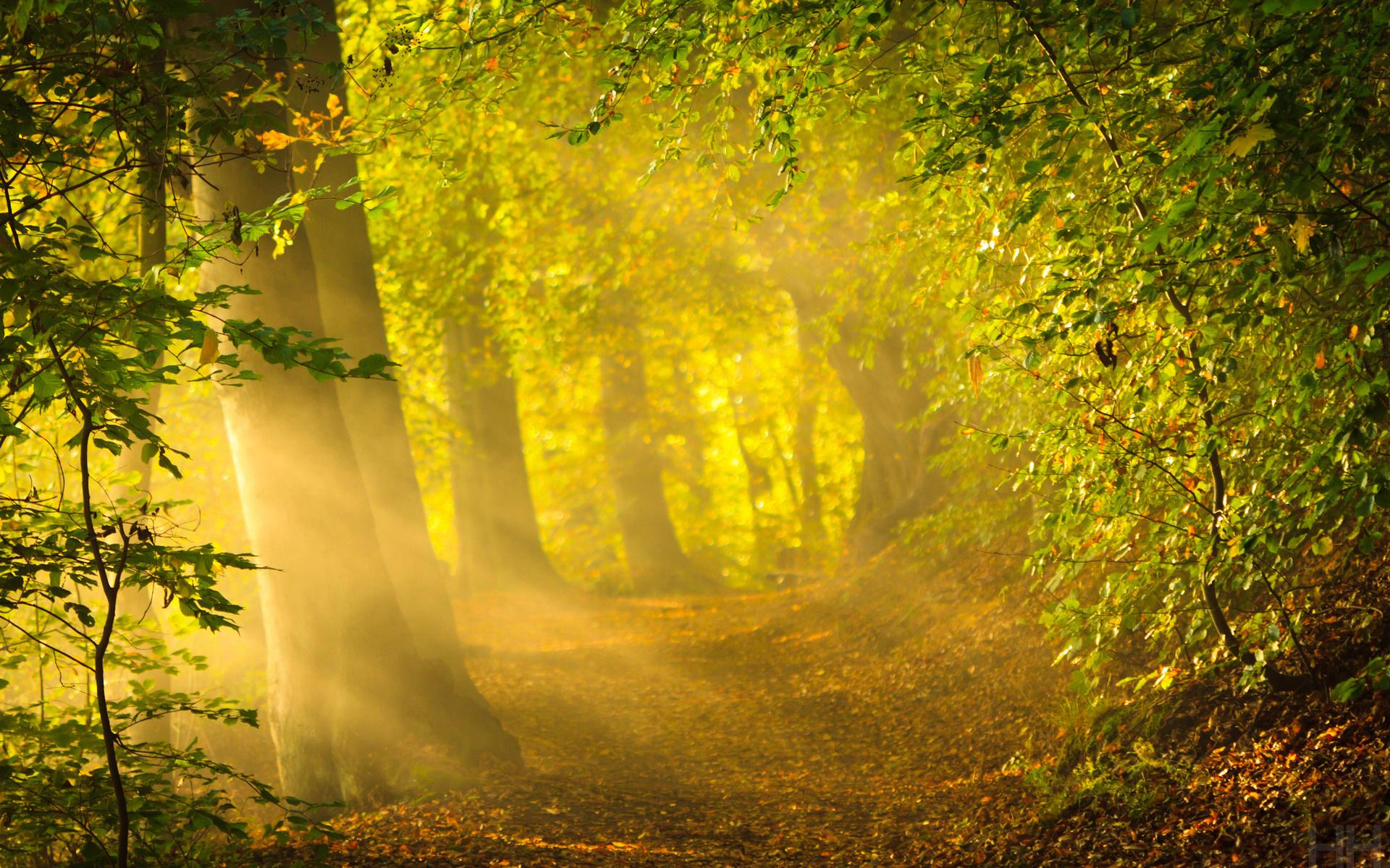 вышеперечисленных осеннее солнечное утро картинки подсветка, установленная под