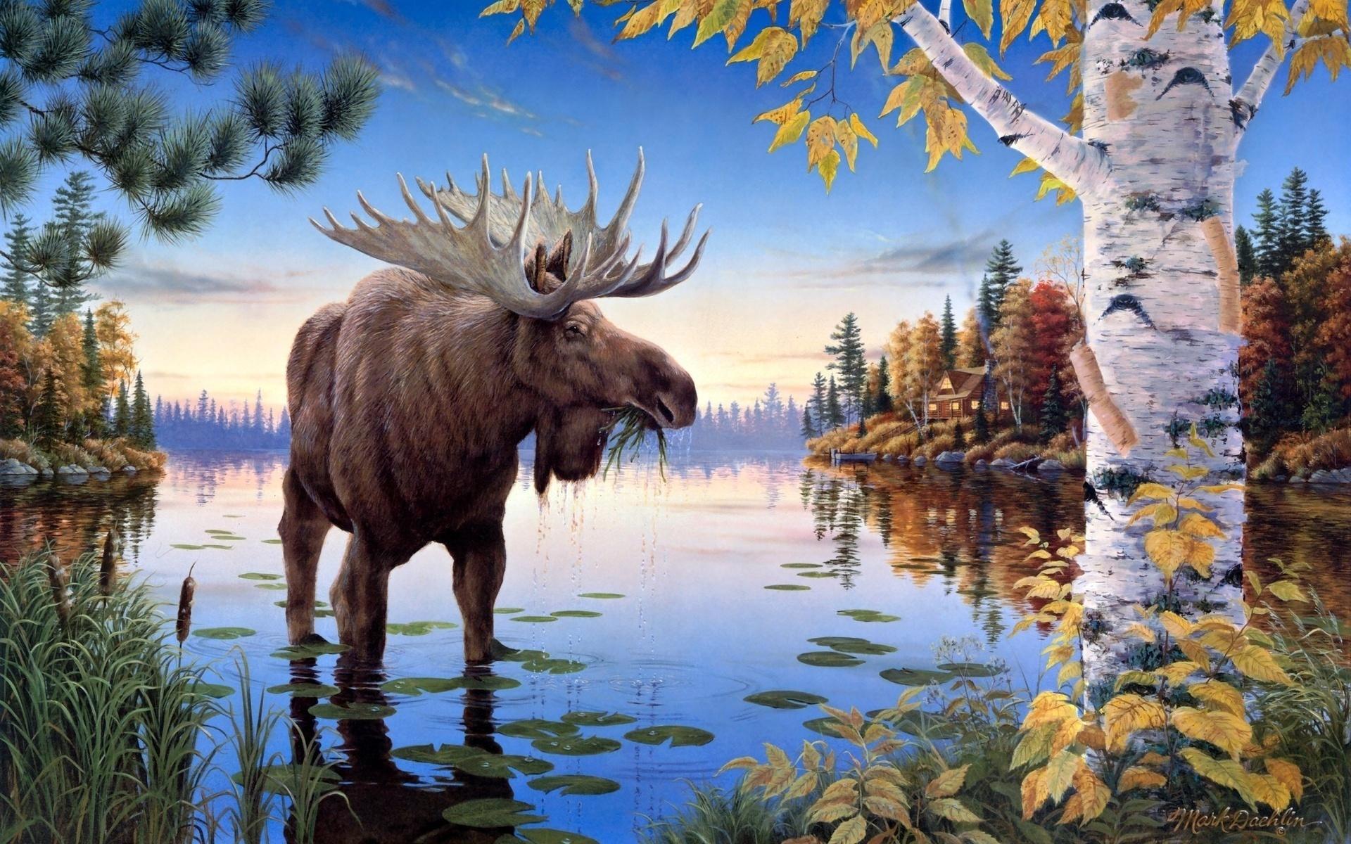 Природа и звери в картинках