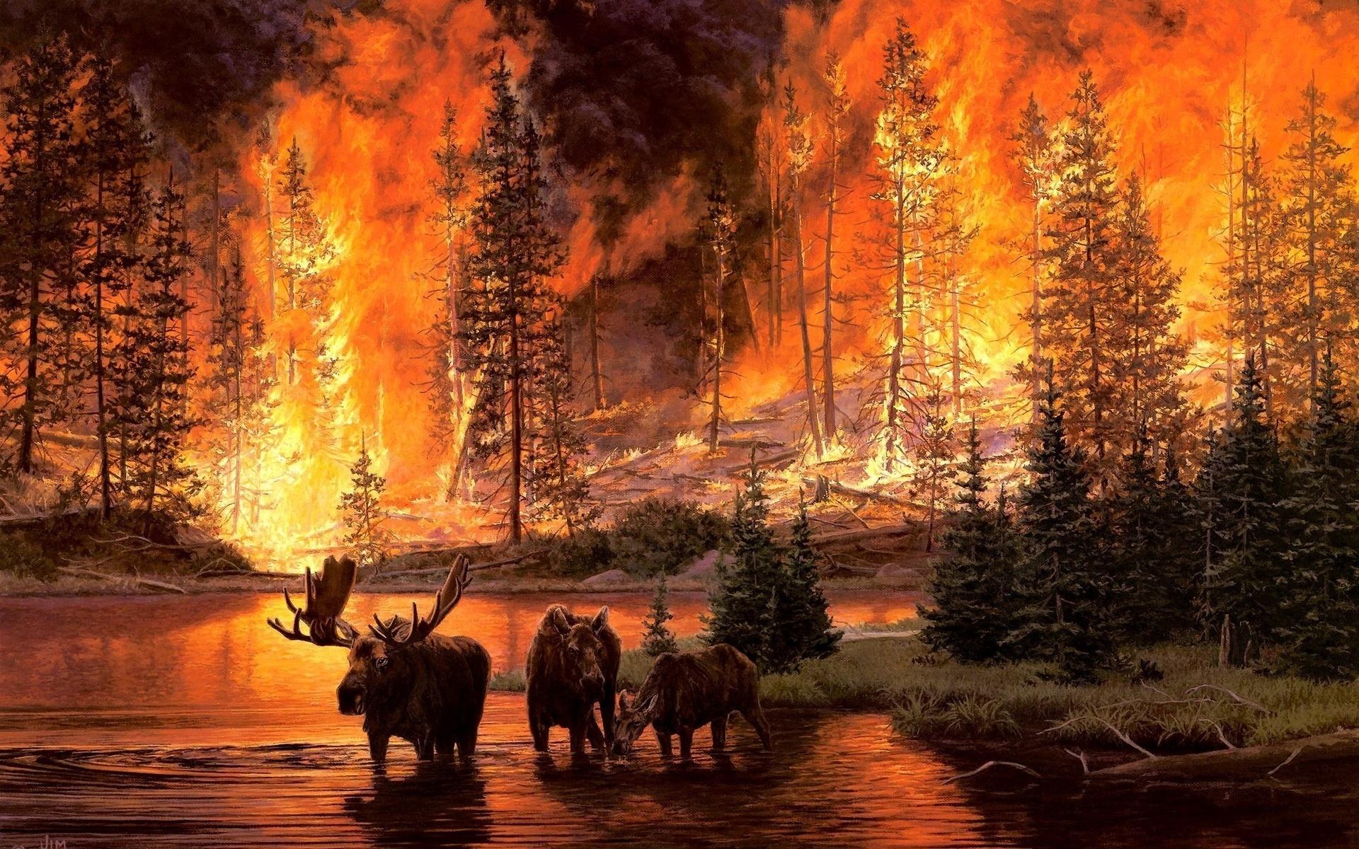 Картинки огня в лесу