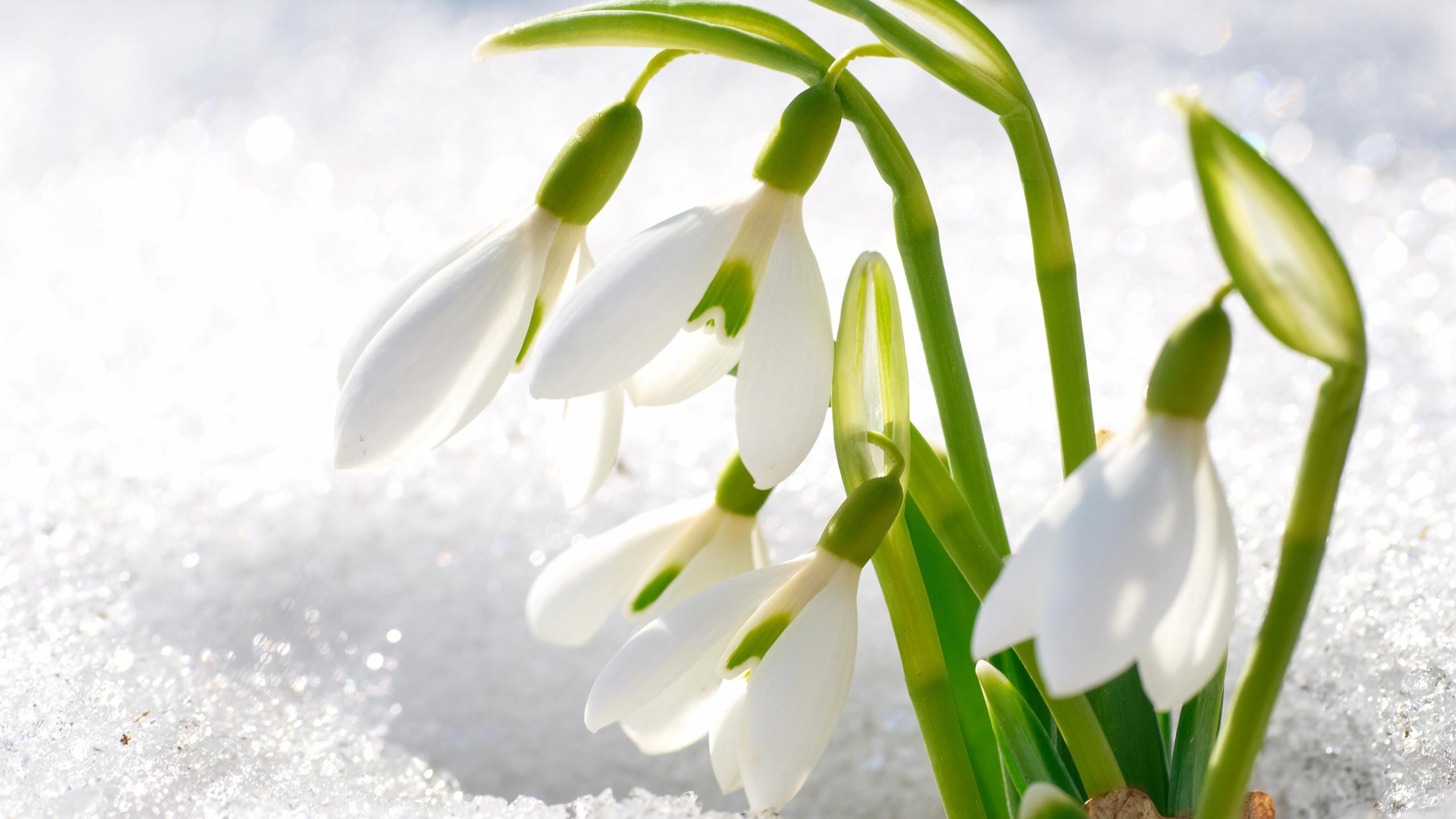 цветочки весенние картинки вызывает боль мышцах