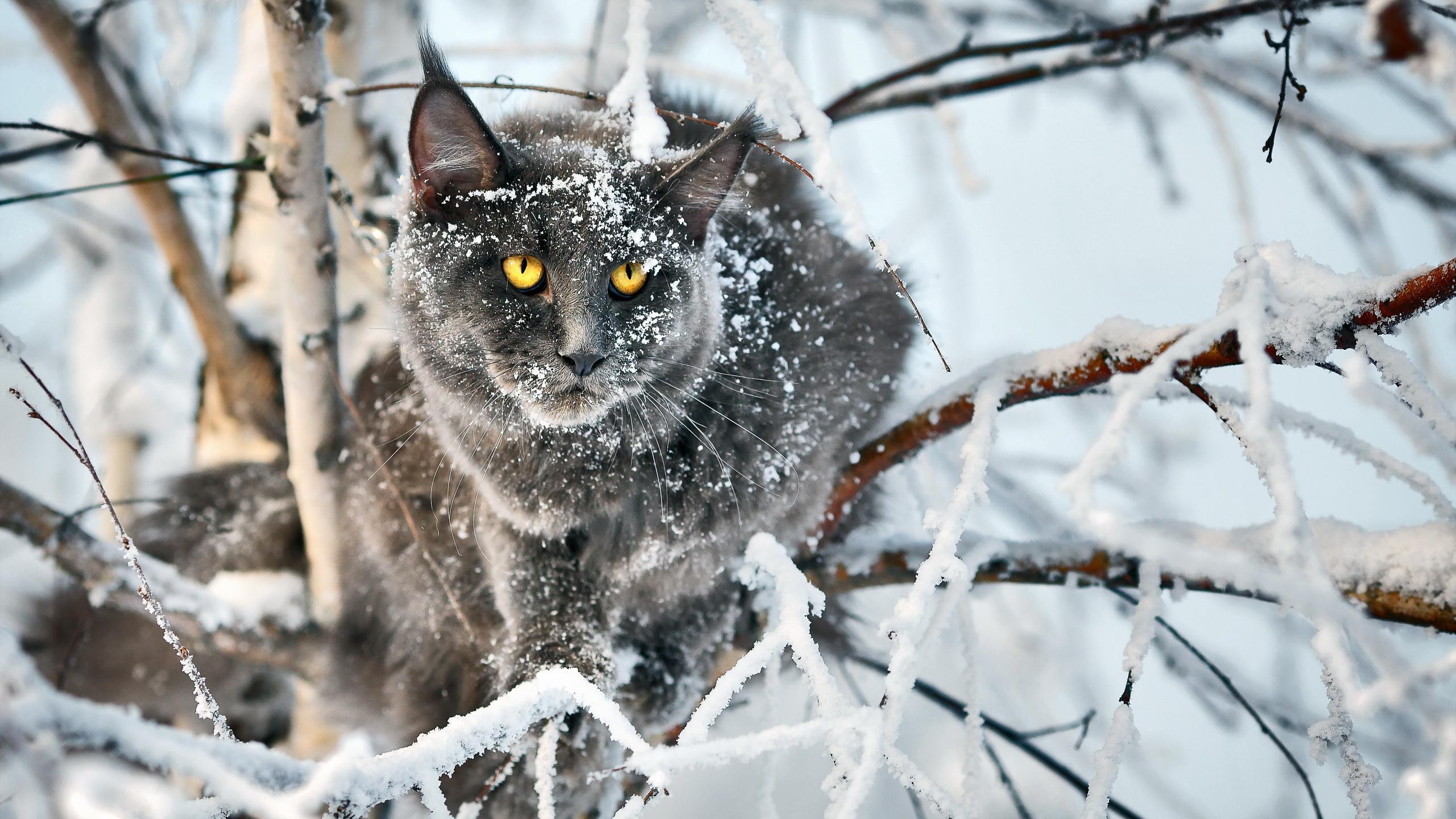Картинки зимние пейзажи котята